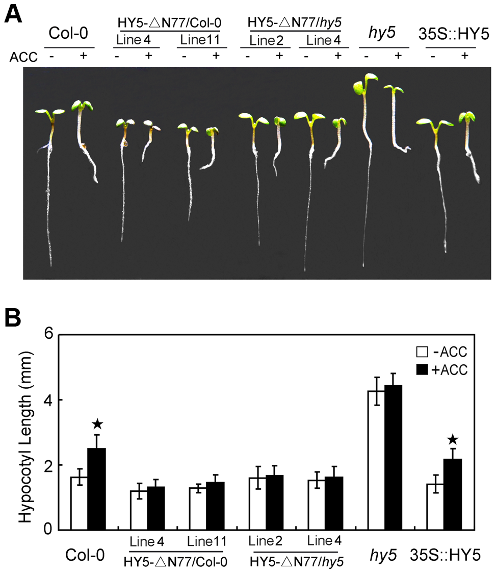 COP1-HY5 interaction is required for HY5-mediated hypocotyl growth.