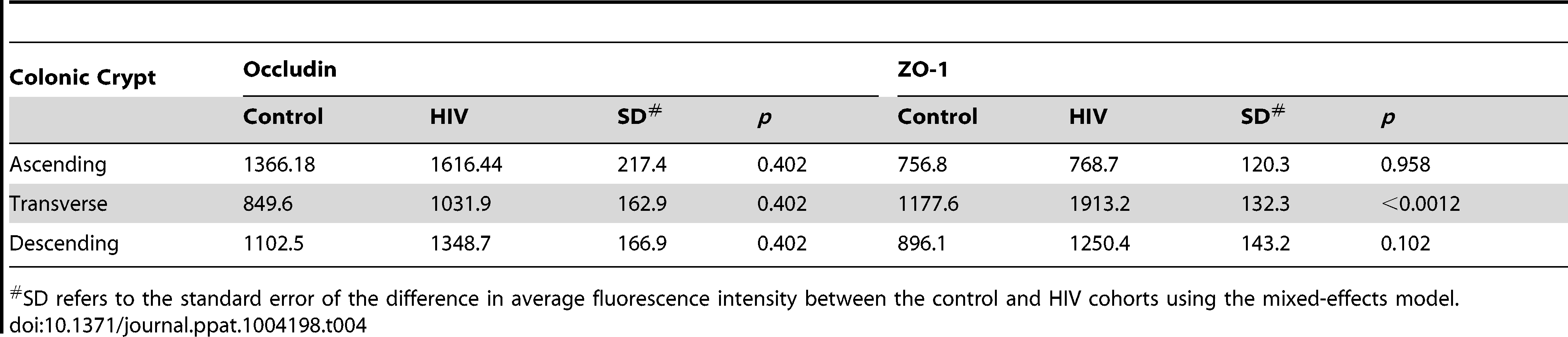 Average fluorescence intensity for occludin and ZO-1 staining of colonic crypt epithelium sections.