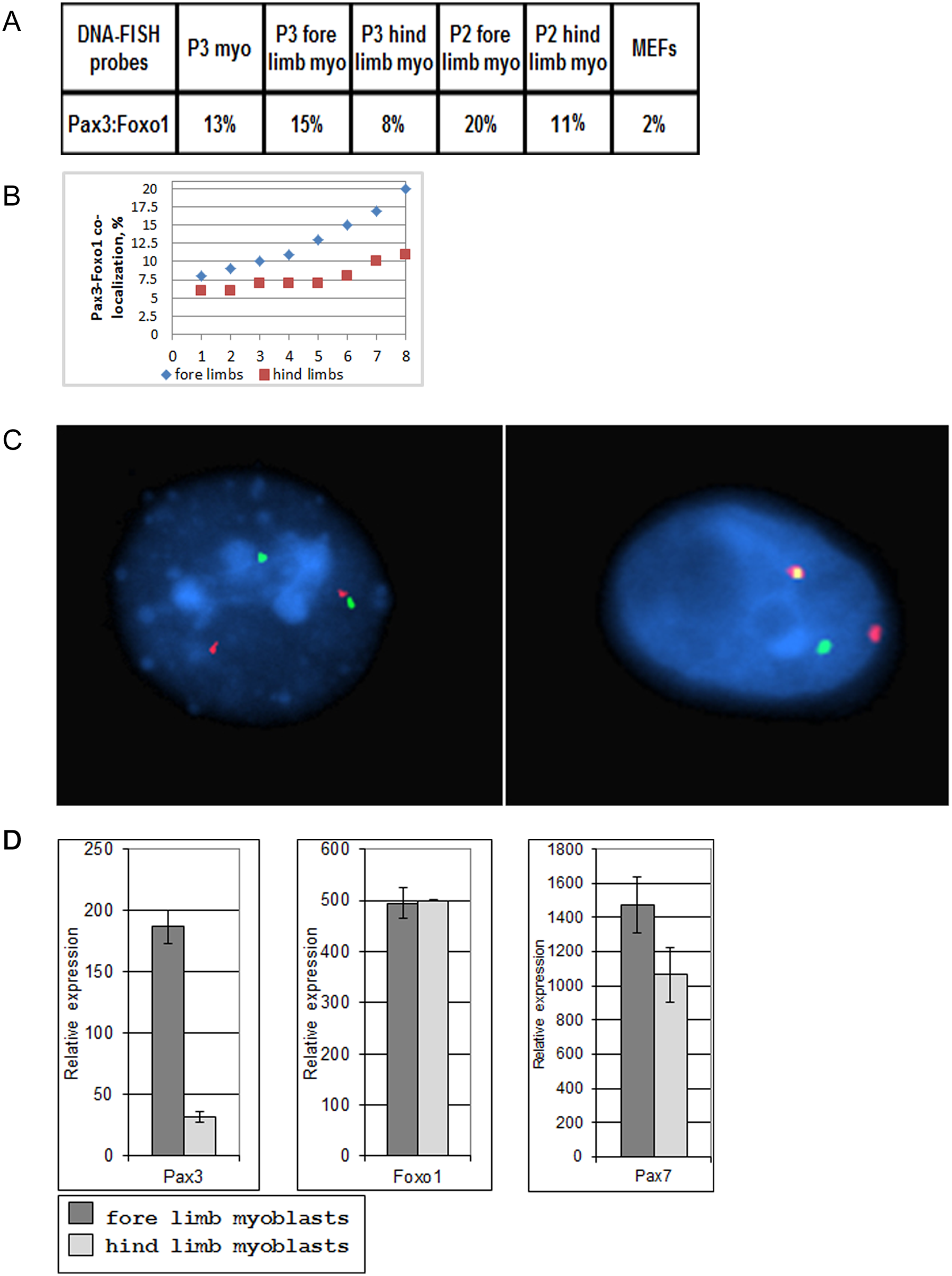 Co-localization of <i>Pax3</i> and <i>Foxo1</i> in primary mouse myoblasts.