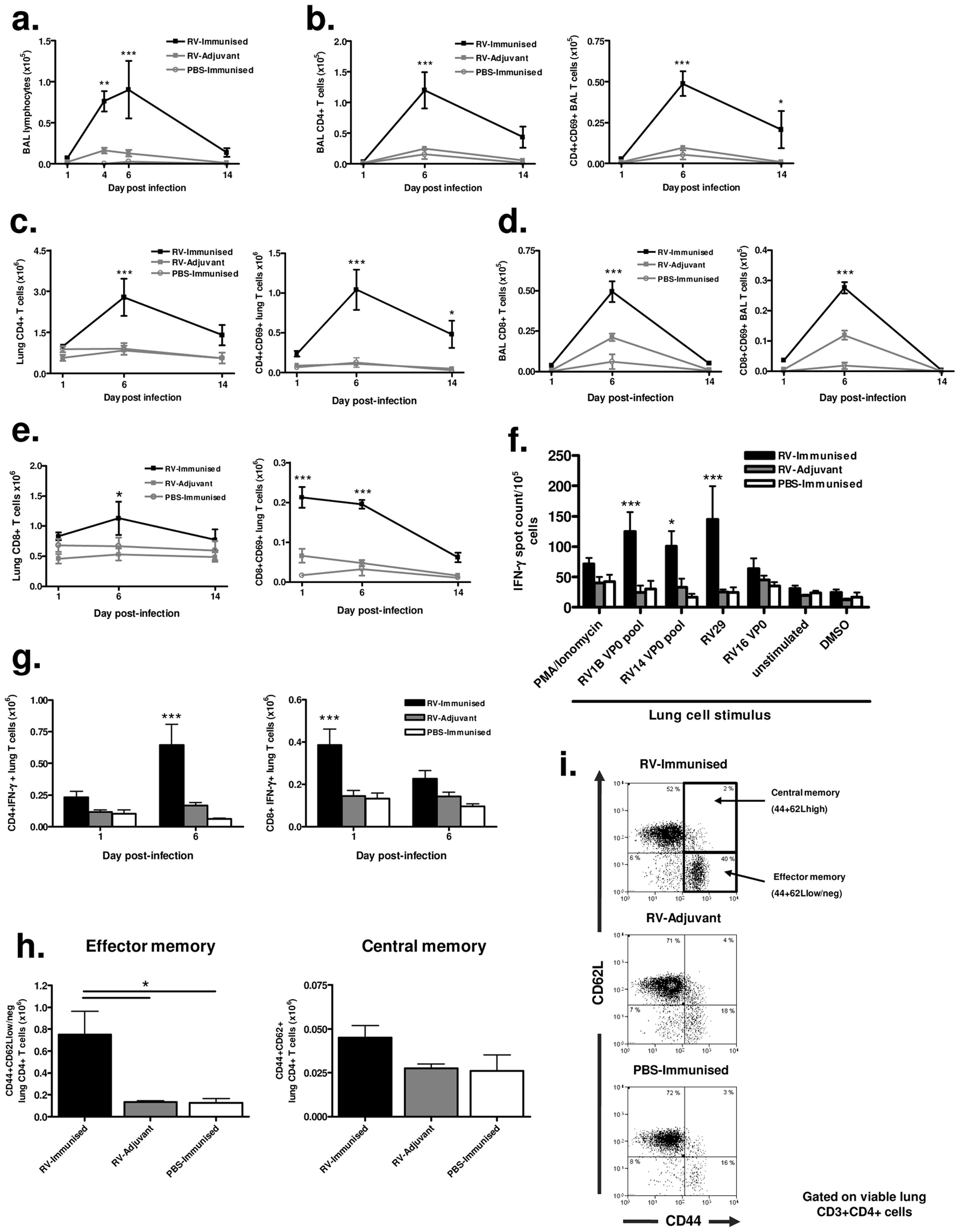 Immunization enhances effector and memory T cell responses to infection with a more distantly related RV.