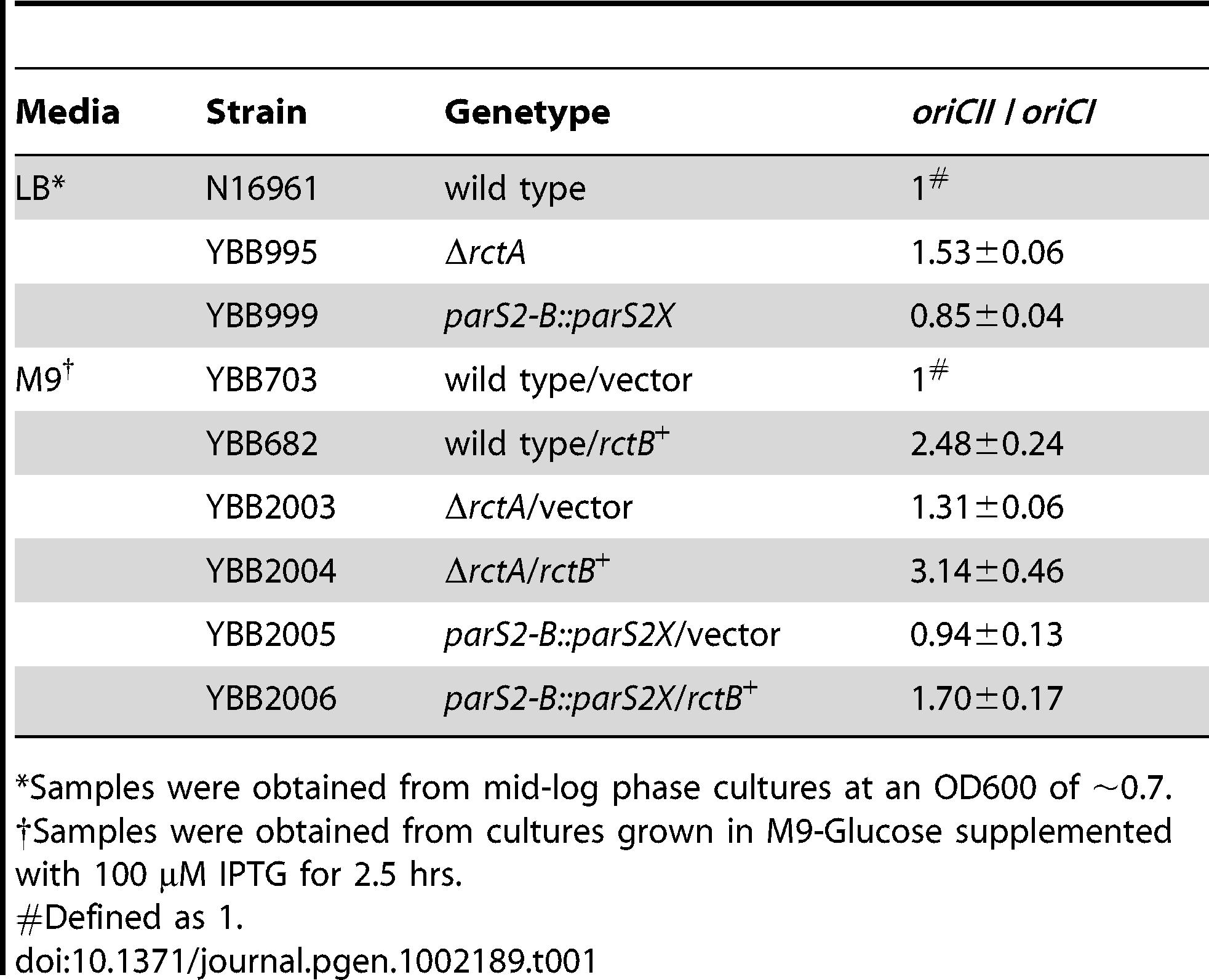Ratio of <i>oriCII</i>/<i>oriCI</i> in <i>V. cholerae</i> strains.