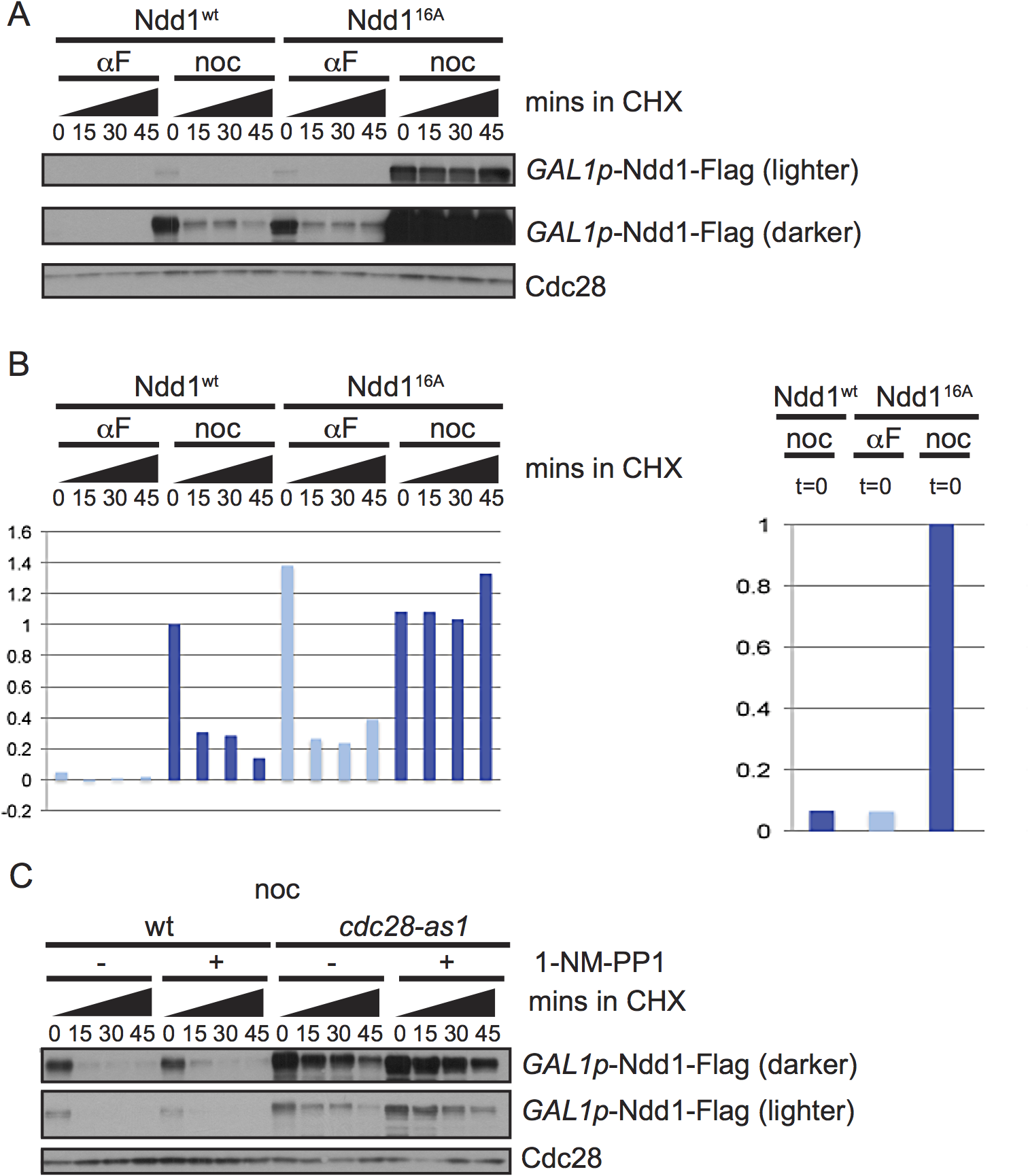Ndd1 turnover requires Cdk1, Hog1, and three of the GSK3 family kinases.