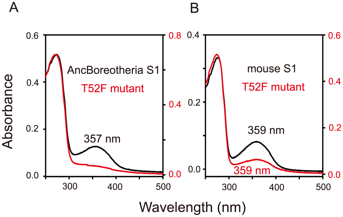 Absorption spectra of SWS1 pigments.