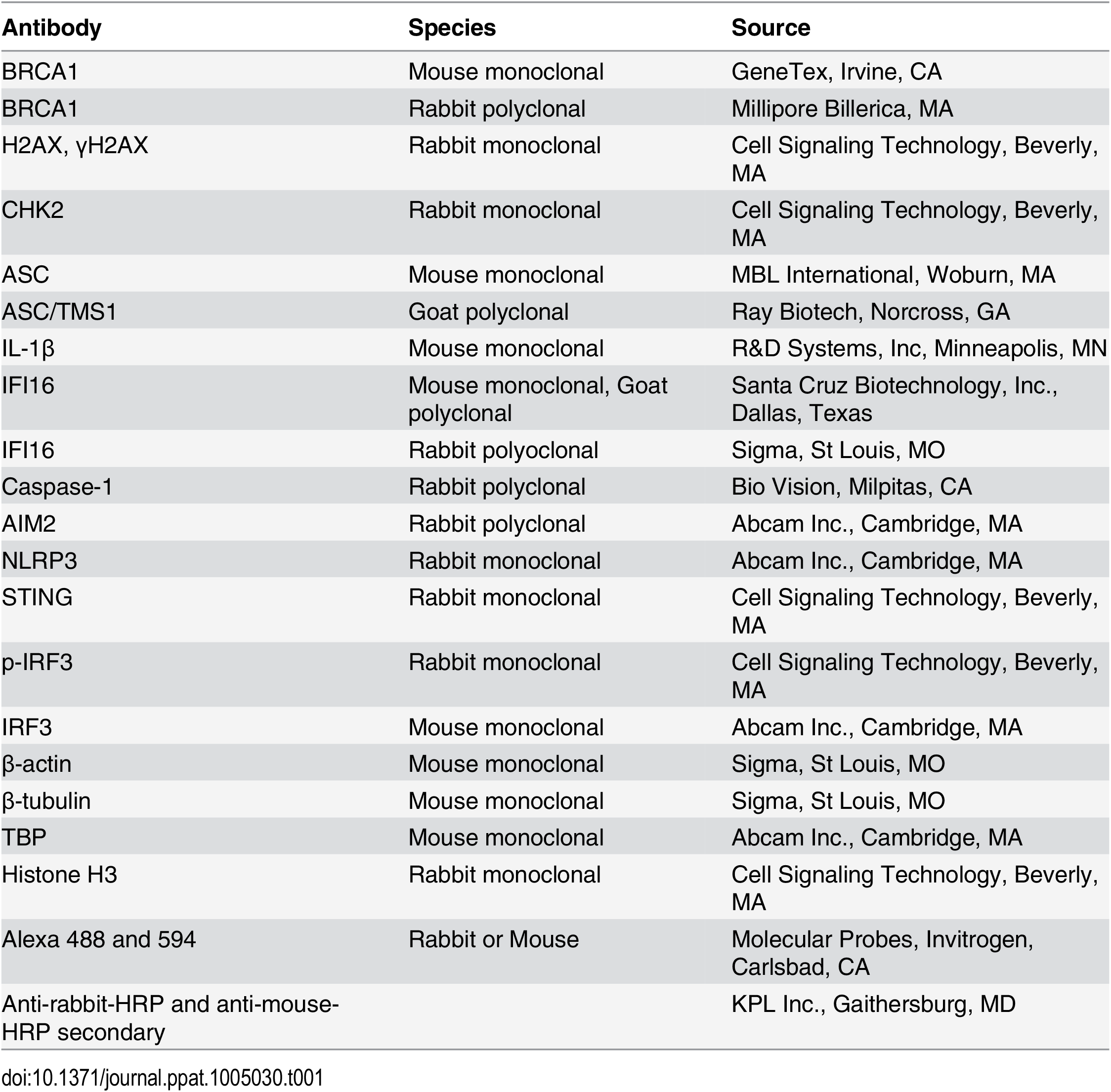 List of antibodies used in this study.