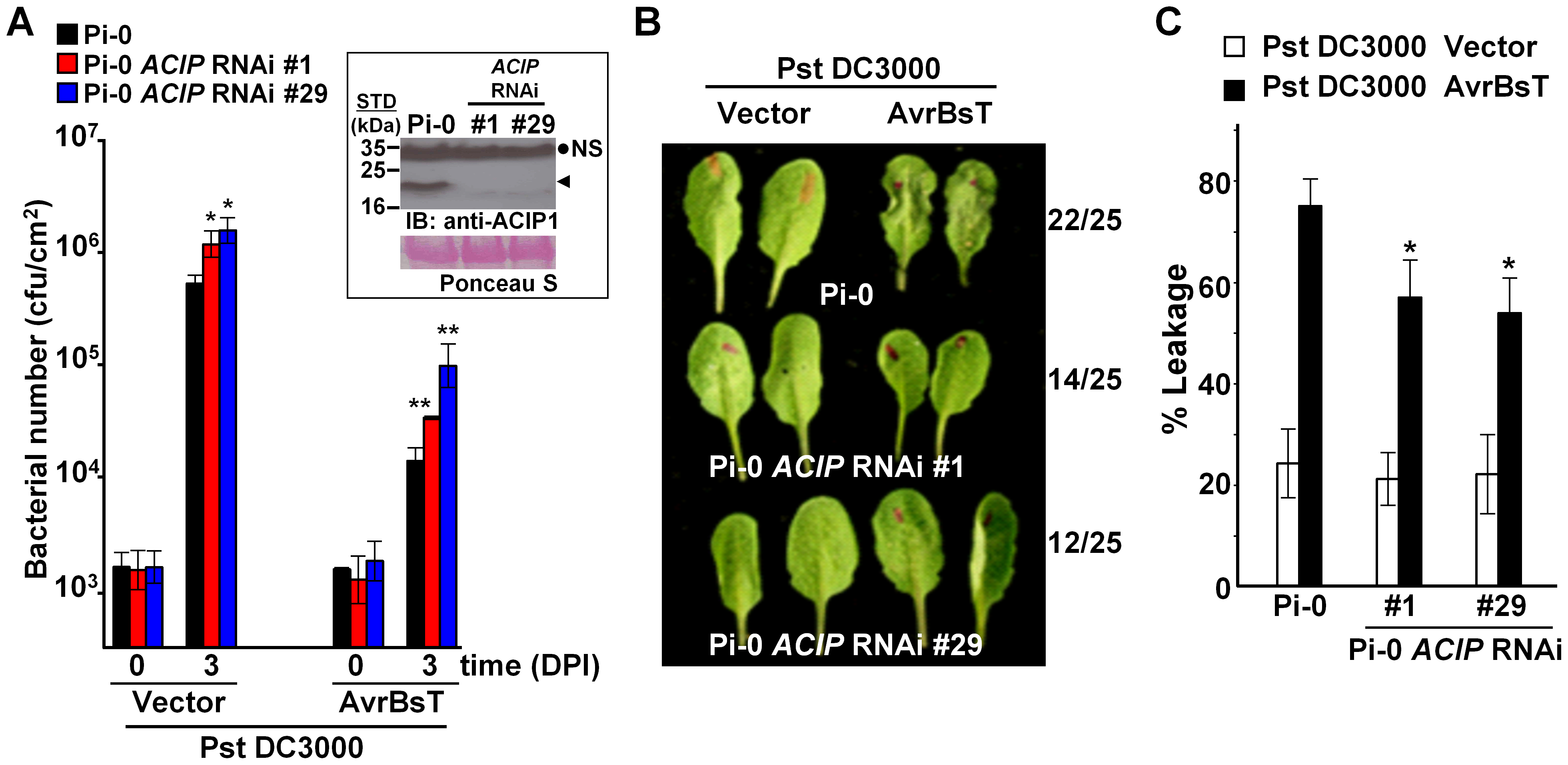 Members of <i>Arabidopsis</i> ACIP family are required for AvrBsT-triggered ETI.