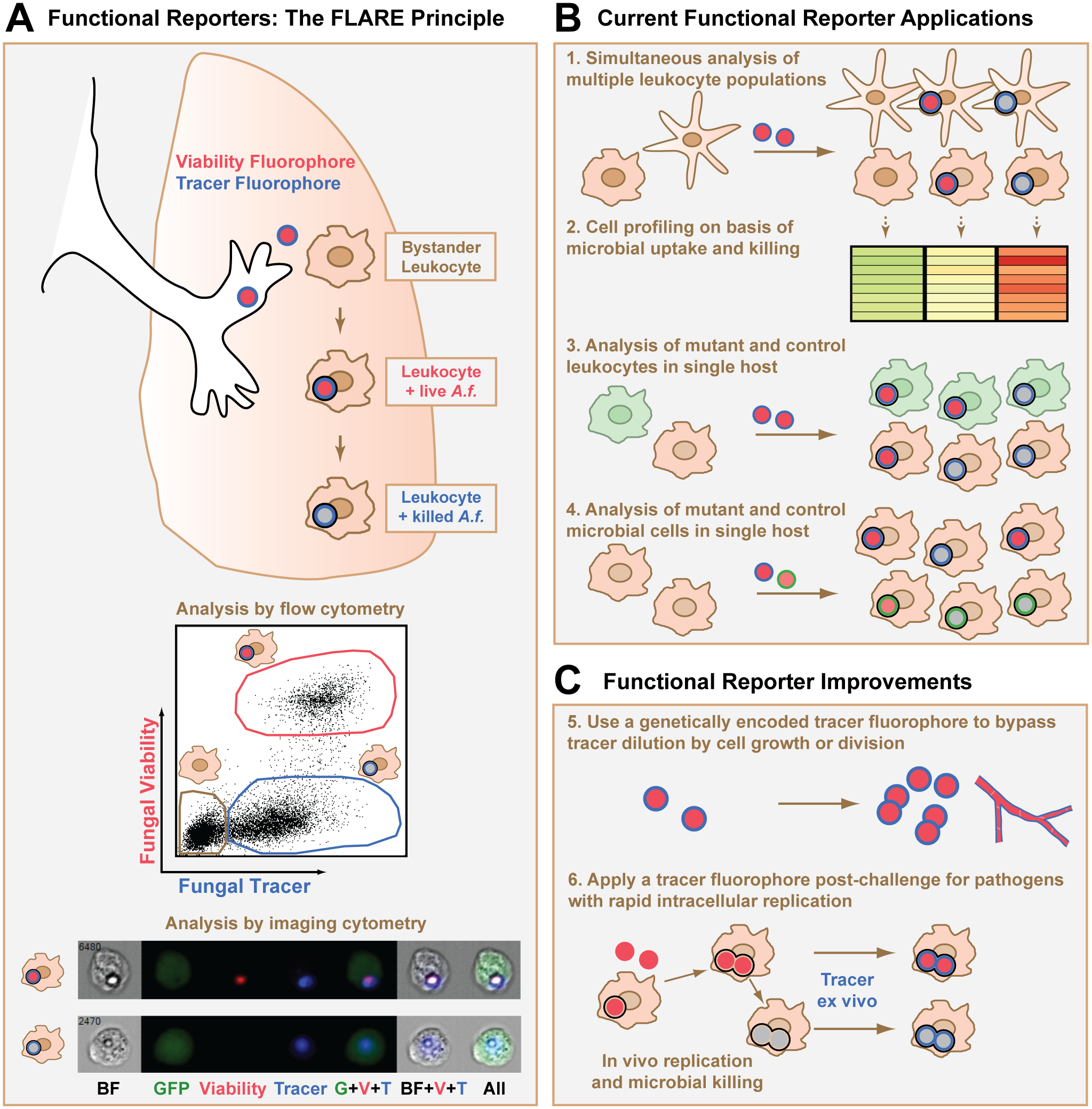 Design, applications, and potential improvements for a functional microbial reporter of viability.