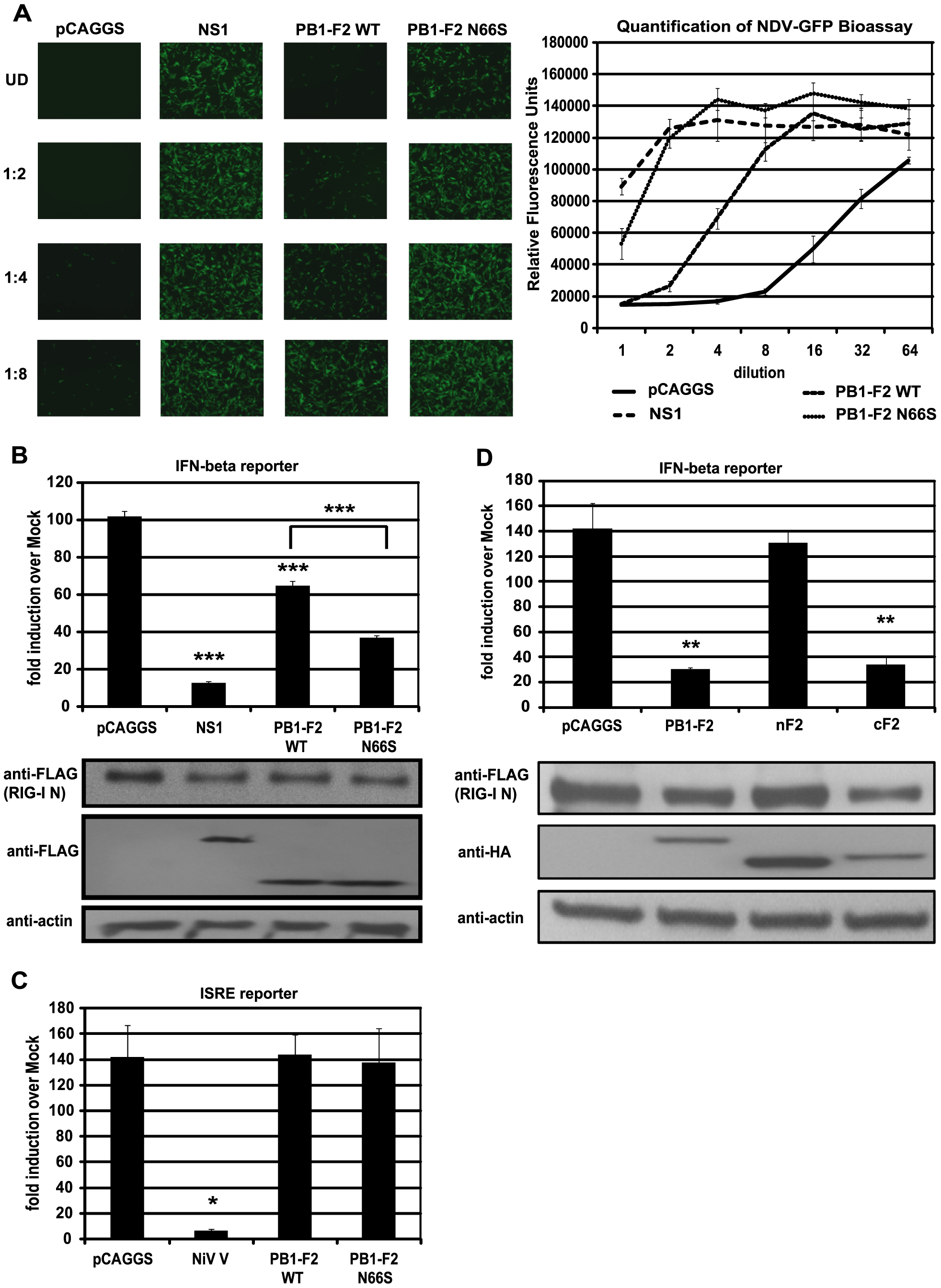 PB1-F2 inhibits RIG-I N induced IFN via its C-terminal domain.