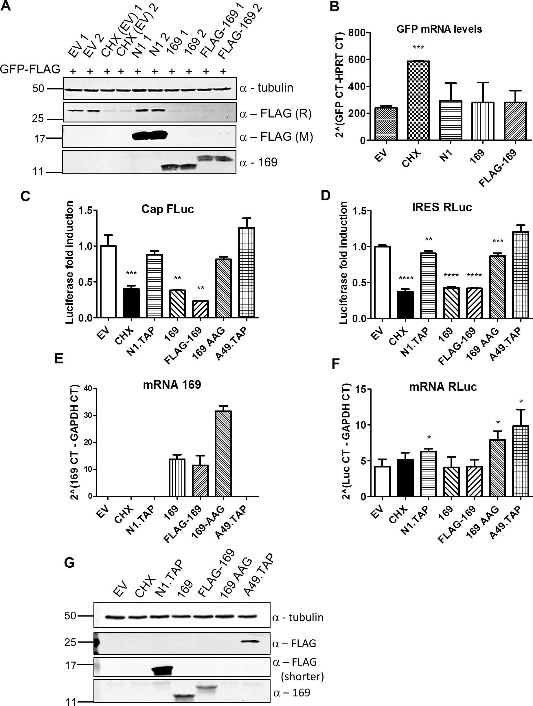 Protein 169 inhibits cap-dependent and FMDV IRES-dependent translation.