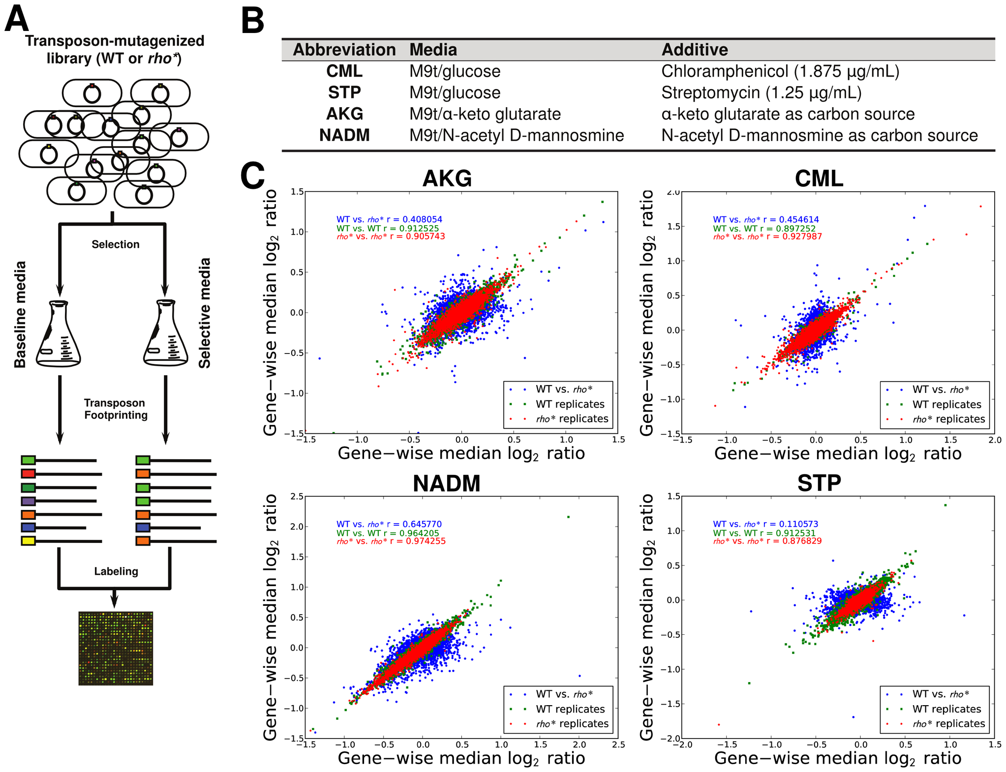 Mapping of fitness landscapes of WT and <i>rho</i>* cells using transposon-mutagenized libraries.