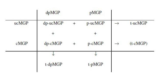 Cirkulující kvantifikovatelné izoformy matrix Gla proteinu v závislosti na stupni karboxylace a fosforylace (upraveno dle: Dalmeijer et al., 2013)
