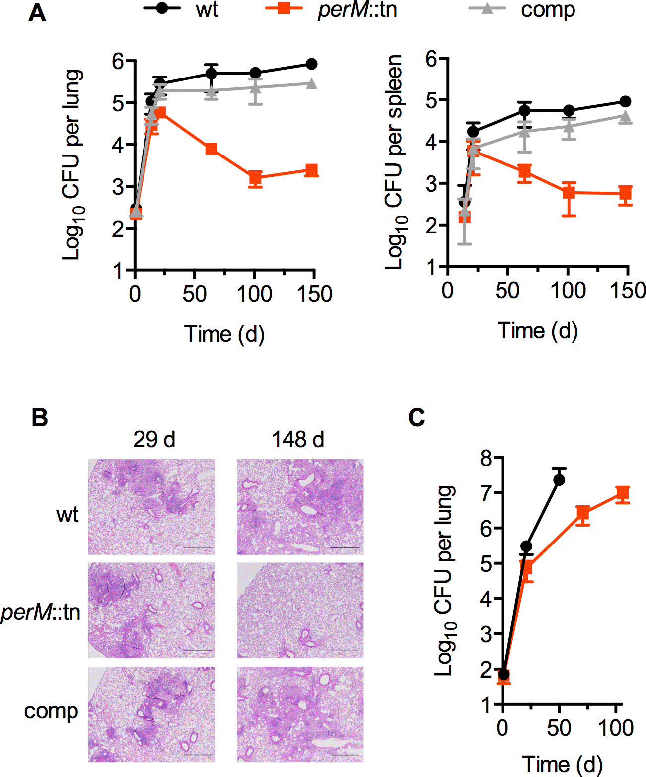 PerM is necessary for Mtb persistence <i>in vivo</i> in an IFN-γ-dependent manner.