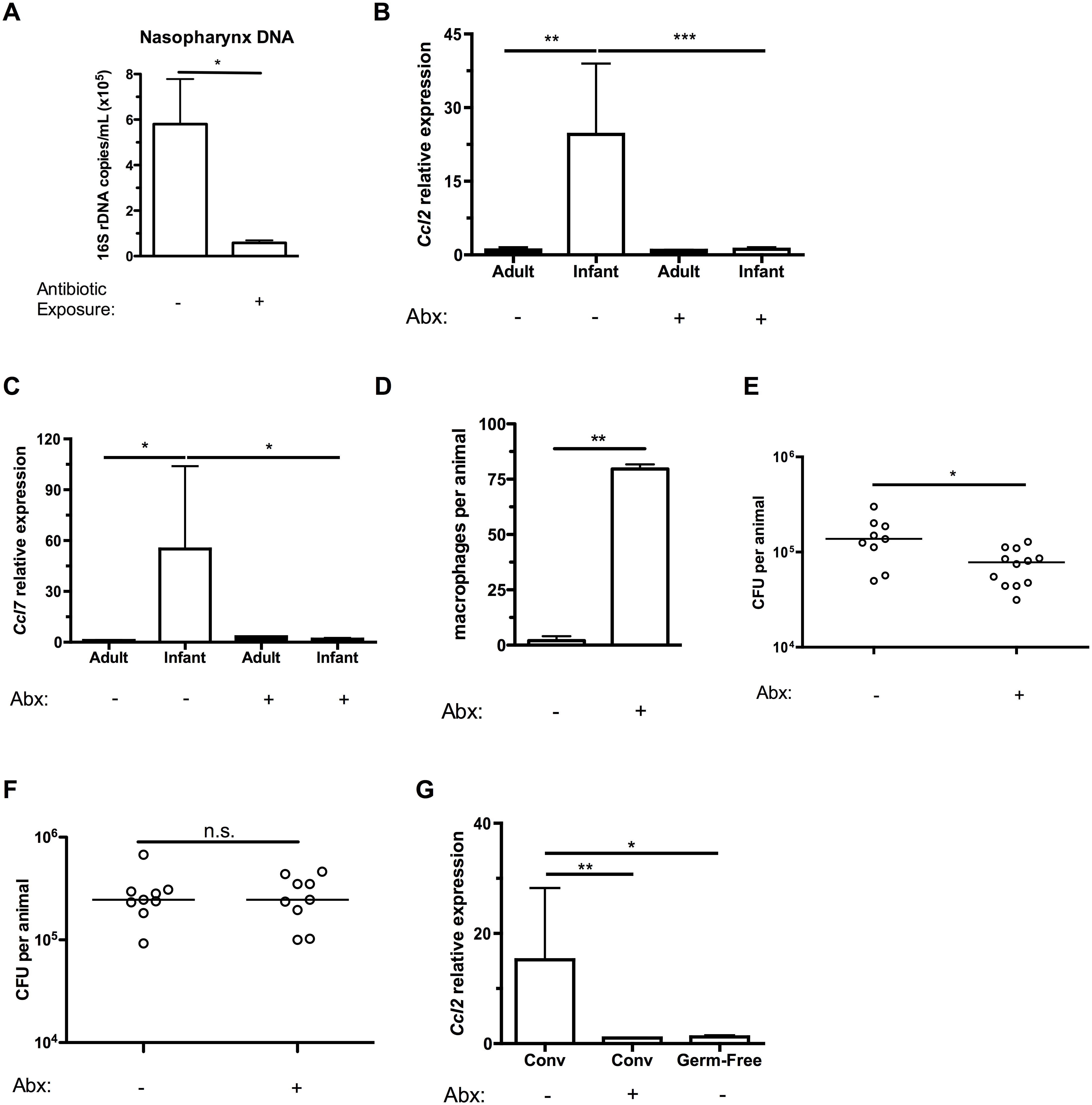 Depleting the microbiota limits infant <i>Ccl2</i> expression and accelerates pneumococcal clearance.