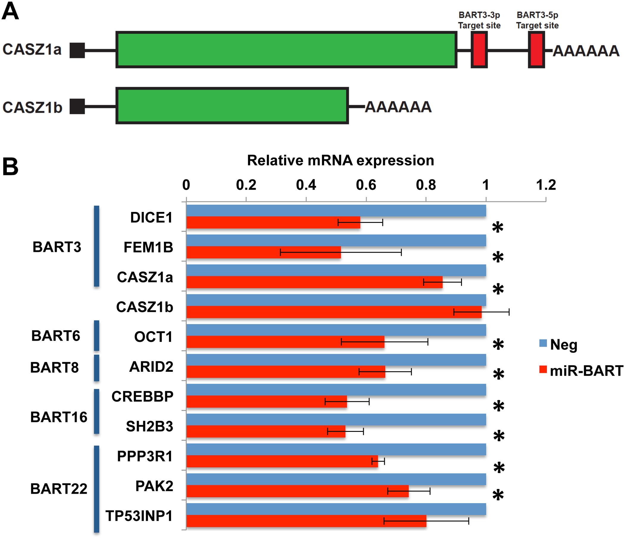 Expression of miR-BARTs in AGS cells reduced steady state mRNA levels for 10 candidate pro-apoptotic genes.