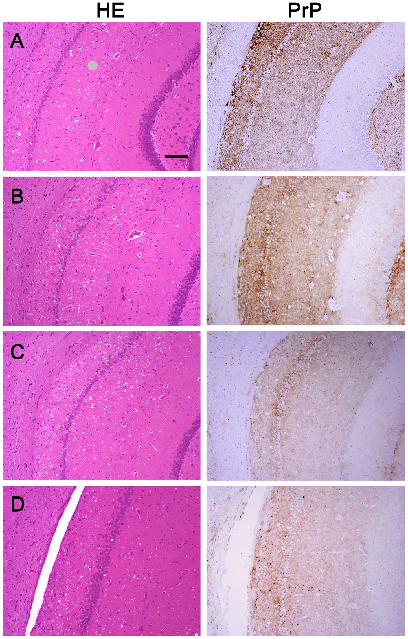 Histopathological and immunohistochemical analyses.