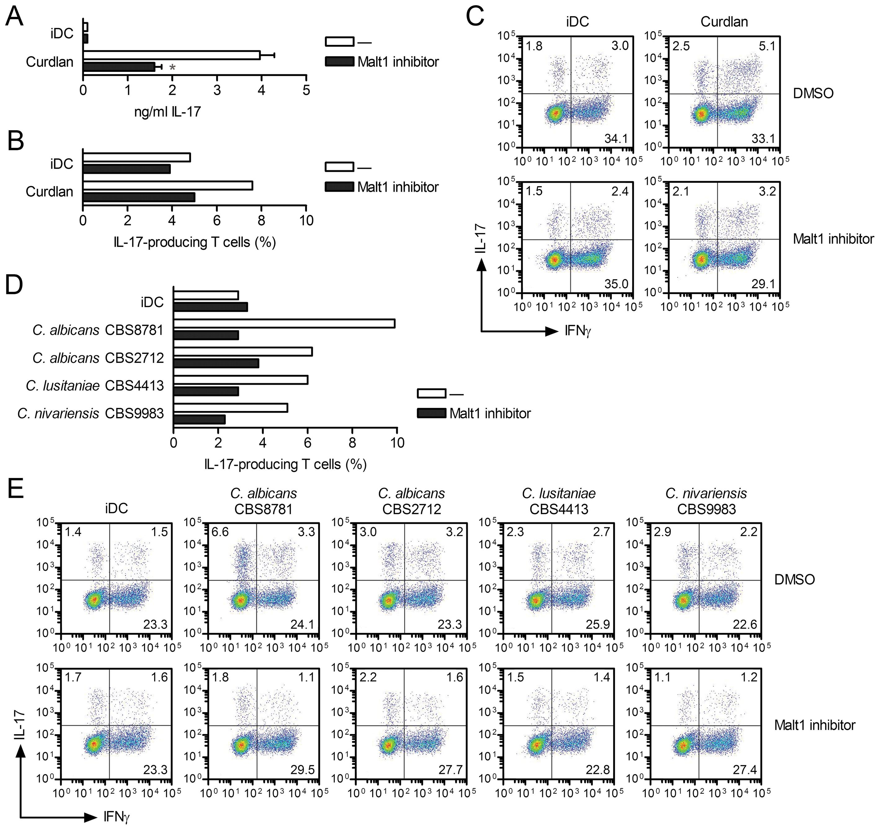 Malt1 signaling skews T helper cell polarization towards T<sub>H</sub>-17.