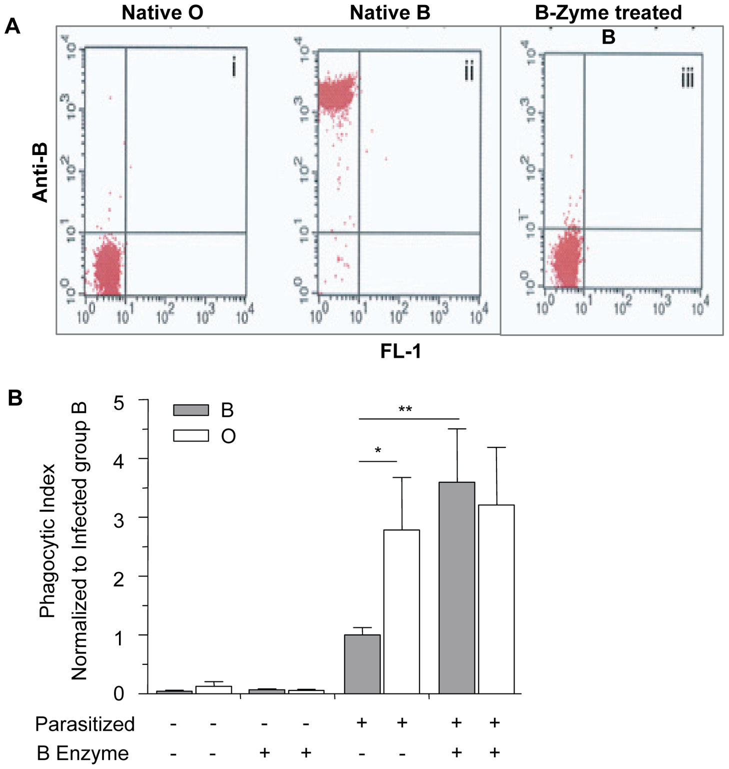 Blood group O (H antigen) status affects the phagocytic uptake of infected erythrocytes by human macrophages.