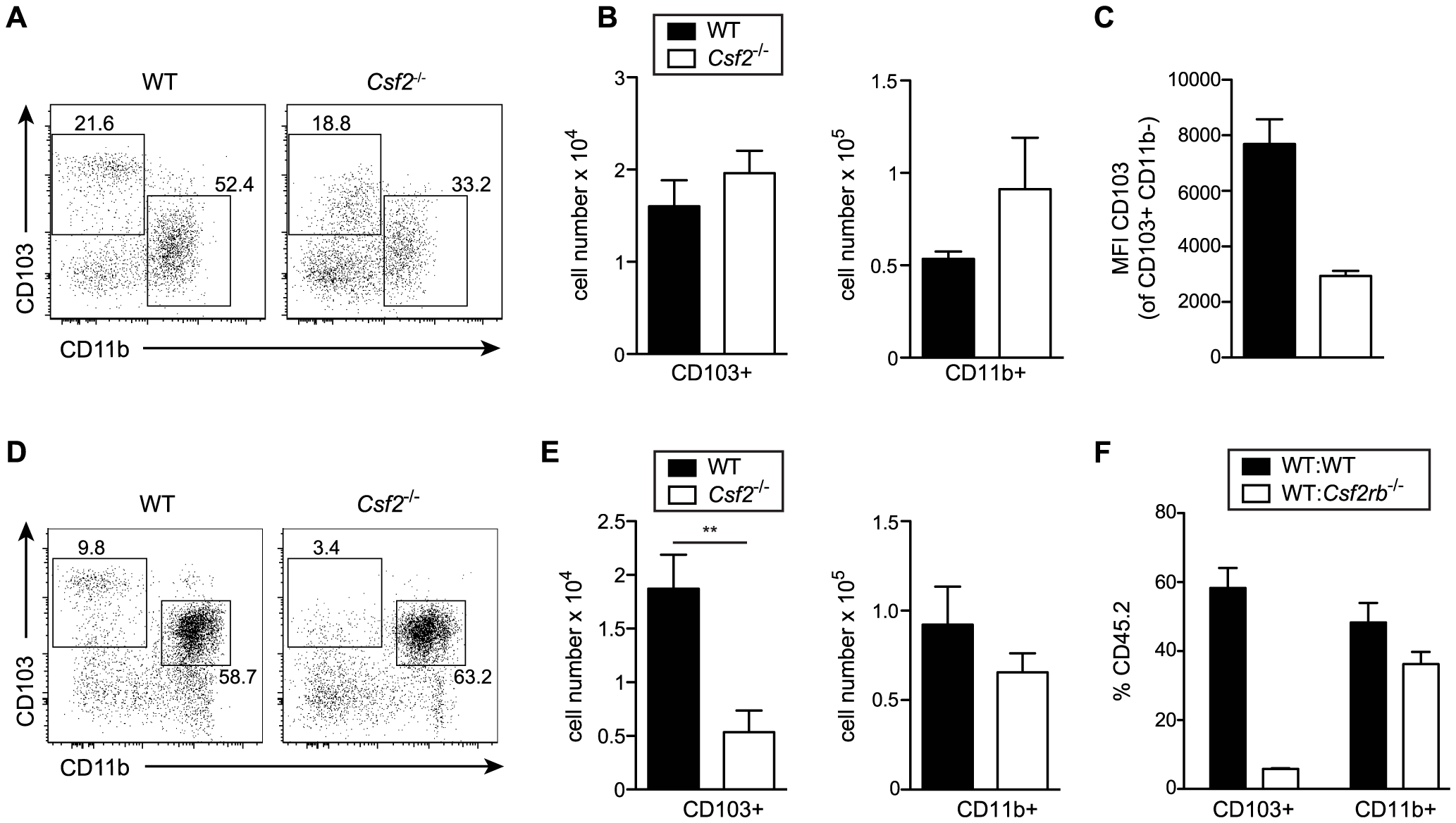 GM-CSF promotes development of CD103<sup>+</sup> DCs and expression of CD103 in young and adult mice, respectively.