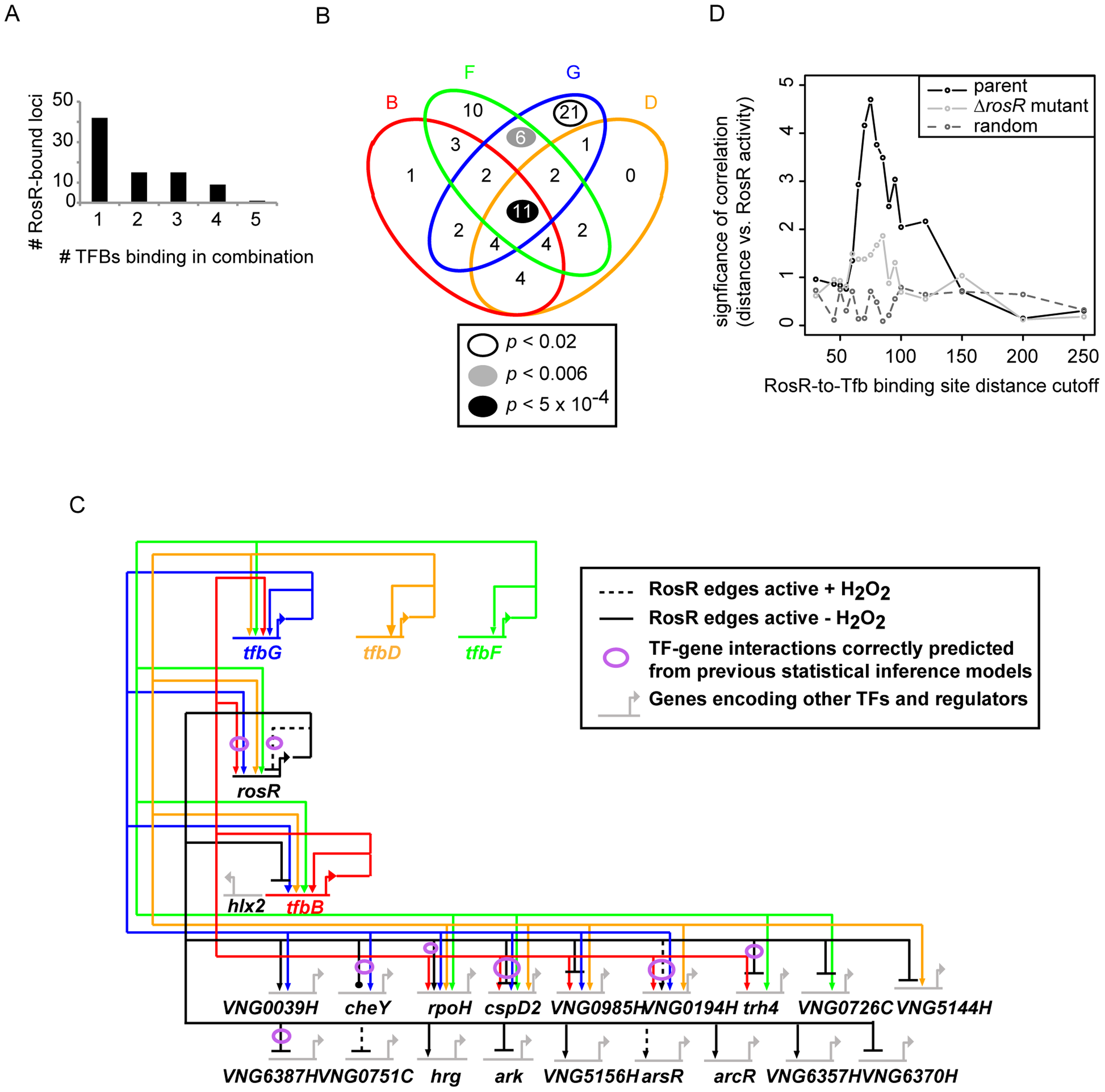 Combinatorial control of gene expression by TFIIB proteins and RosR.