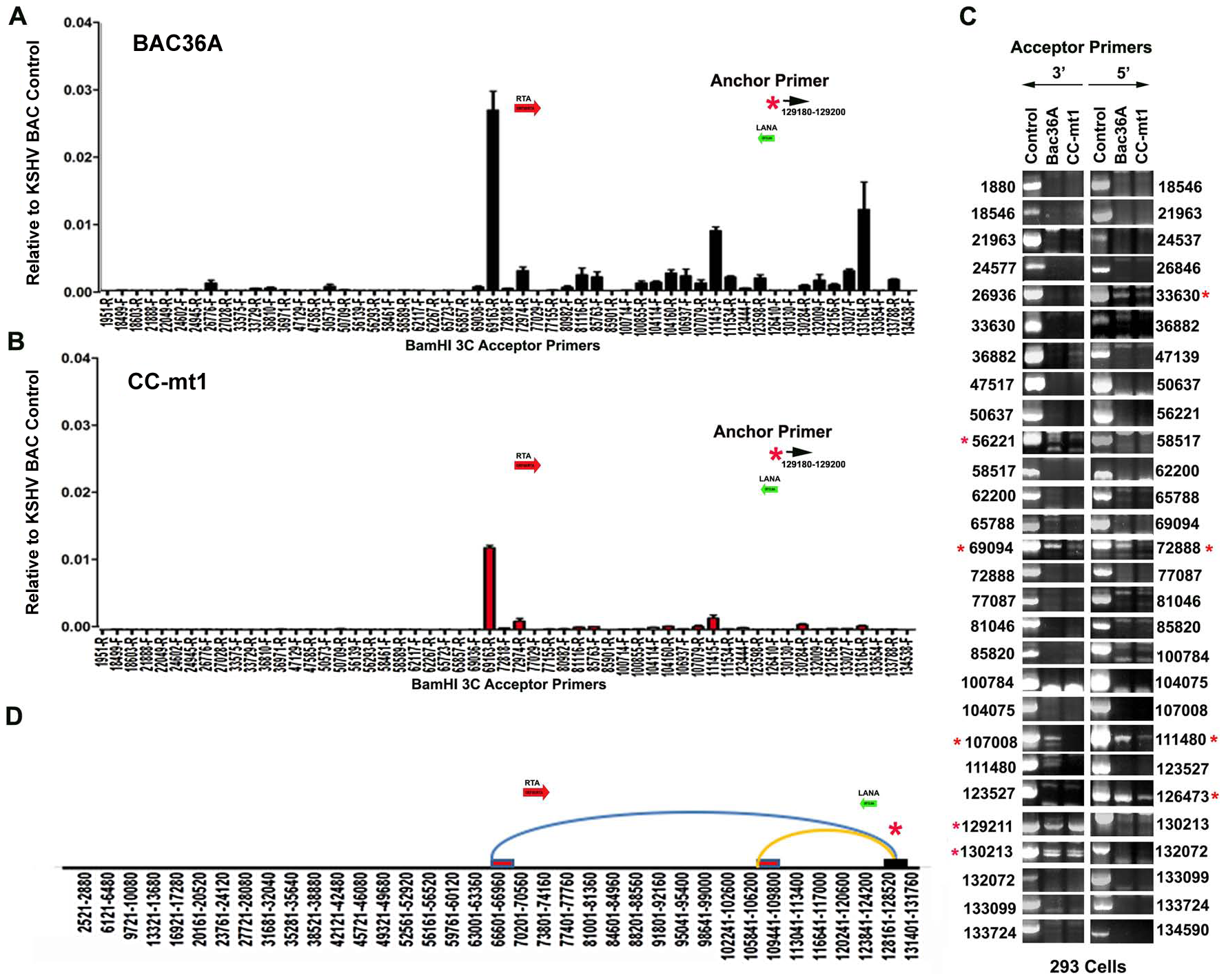 3C analysis of Bac36A-wt and CC-mt1 KSHV genomes in 293 cell pools.