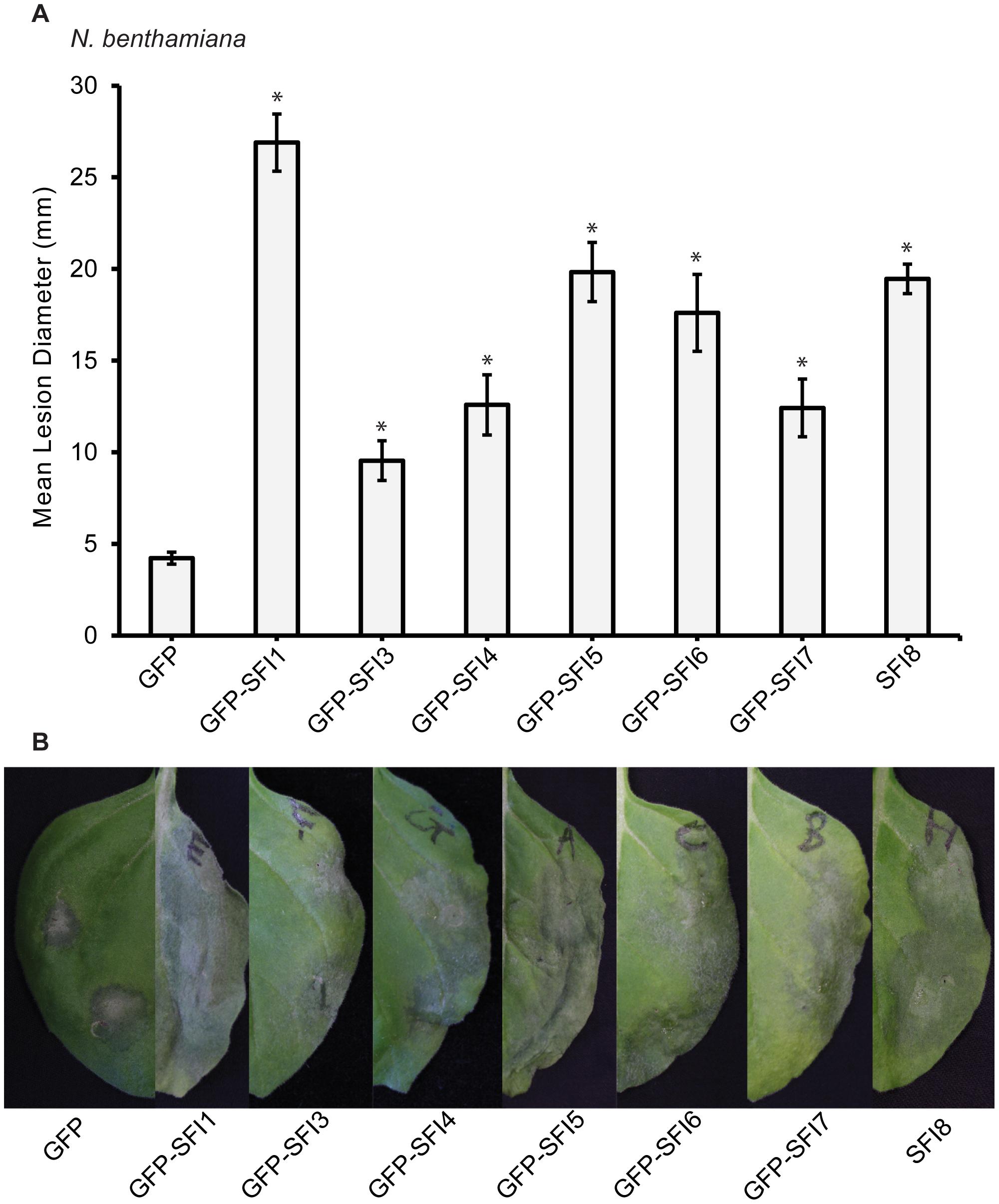 Effect of transient expression of SFI effectors enhances <i>P. infestans</i> colonization of <i>N. benthamiana</i>.
