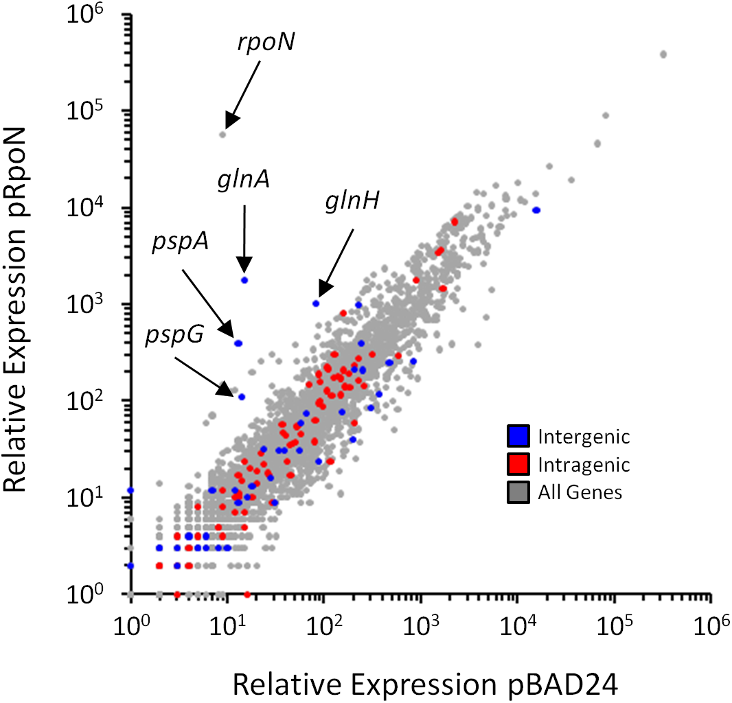 Genome-wide σ<sup>54</sup>-dependent changes in gene expression.