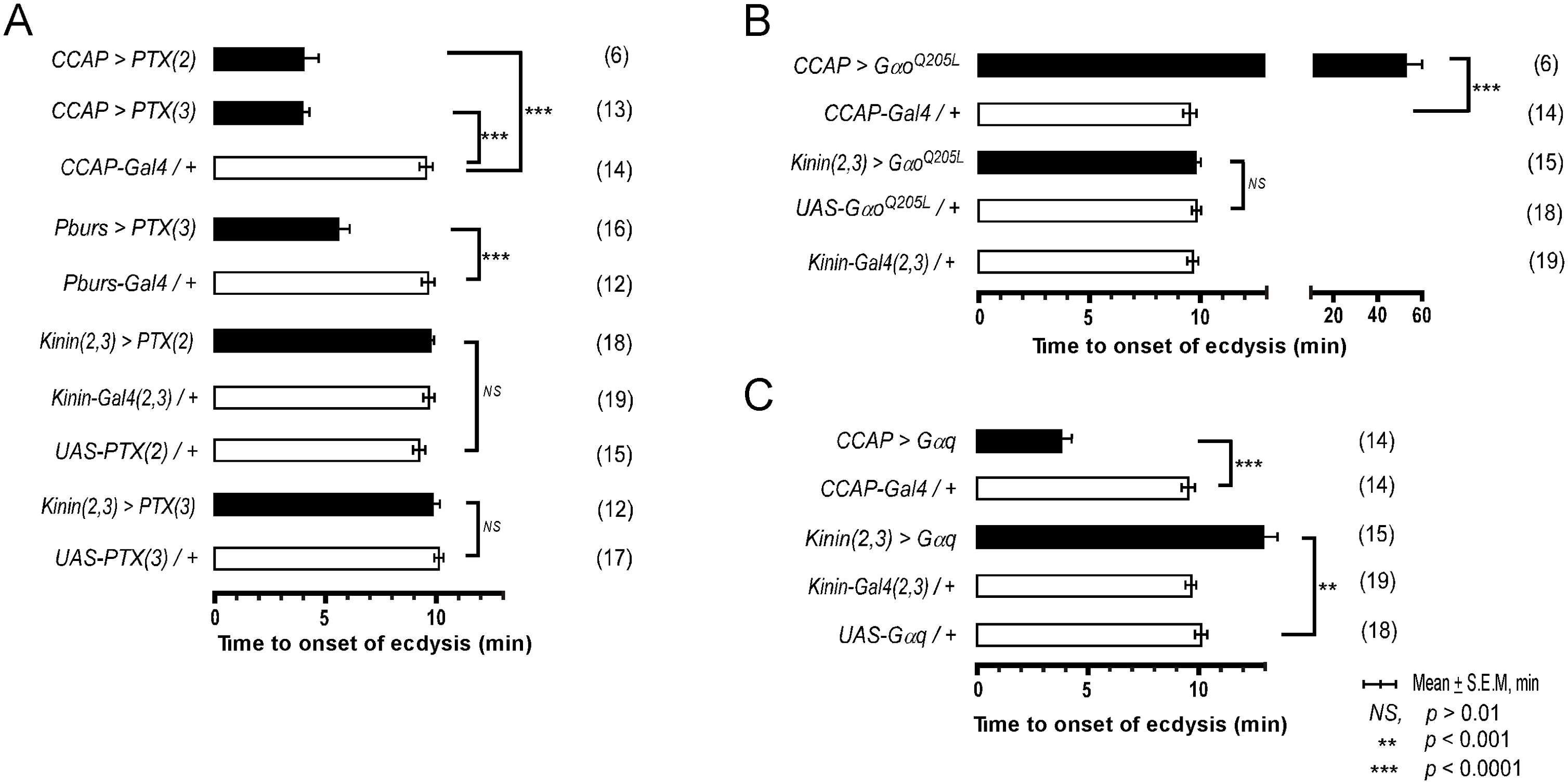 Role of G-Protein-mediated signal transduction in timing of the switch to ecdysis behavior.