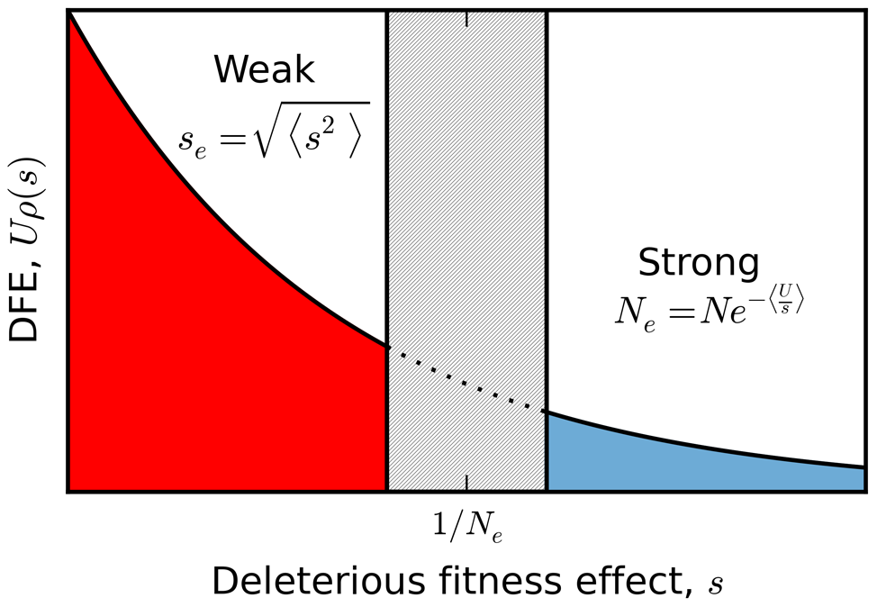 A schematic partition of a broad distribution of fitness effects.