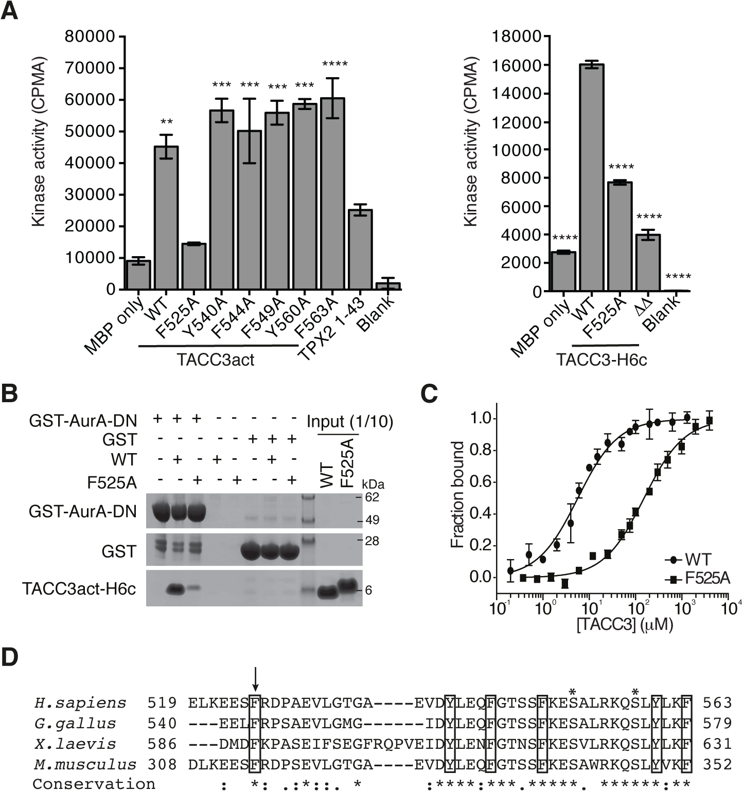 Mapping of key determinants for TACC3 binding to Aurora-A.