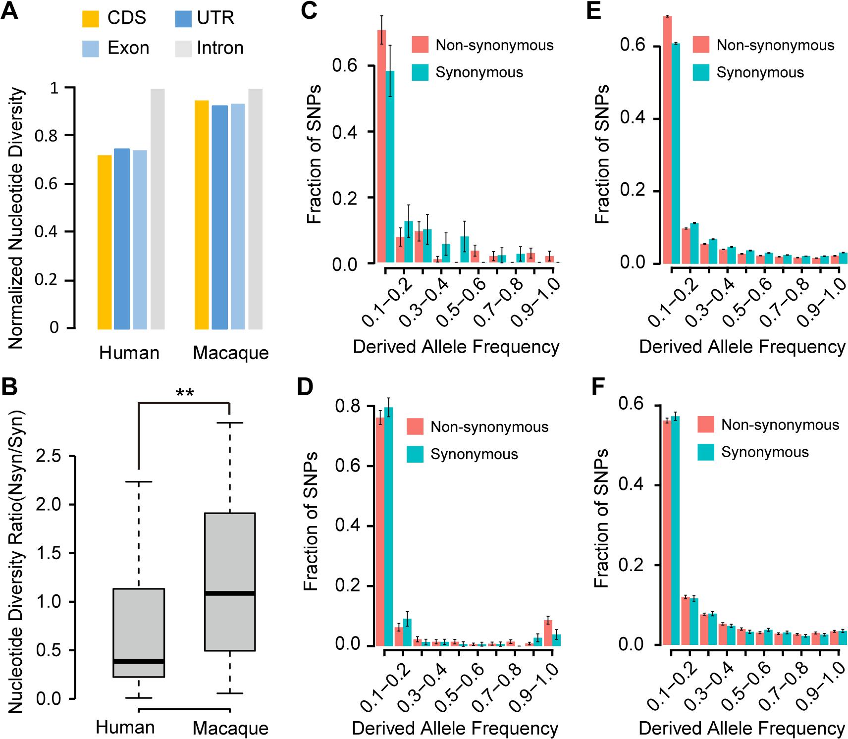 Evidence of purifying selection on the human <i>de novo</i> genes.