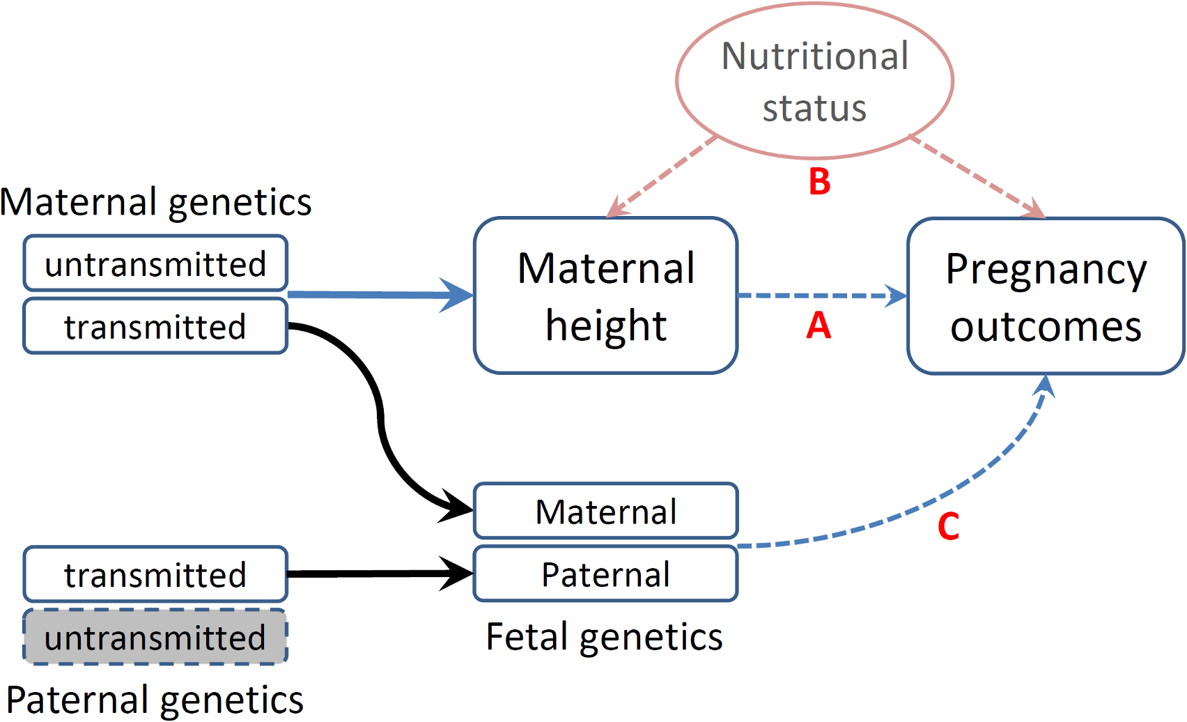 Schematic representation of various causal mechanisms that can lead to the observational associations between maternal height and pregnancy outcomes.