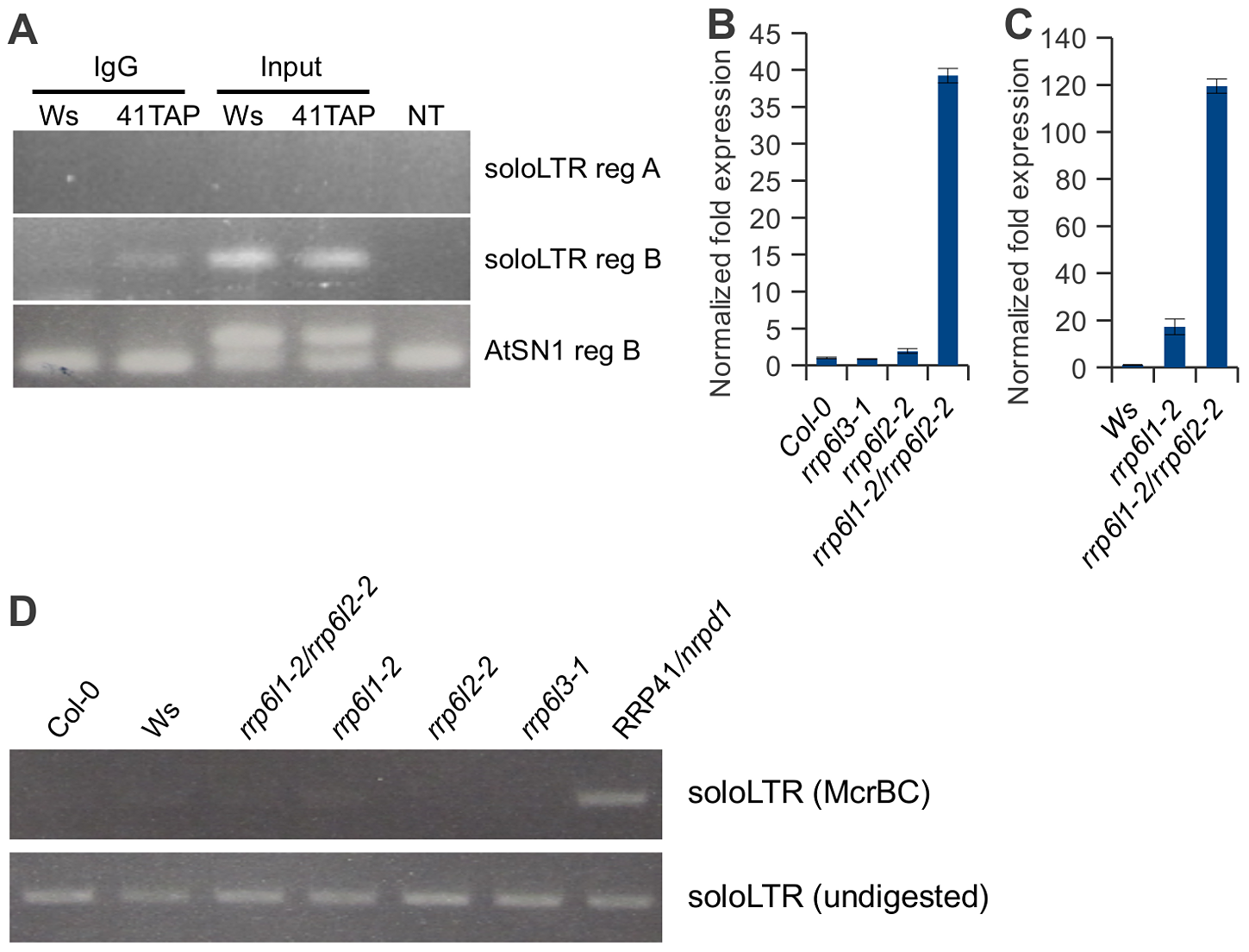 Exosome associates with transcripts produced from the region adjacent to the solo LTR scaffold-generating area.