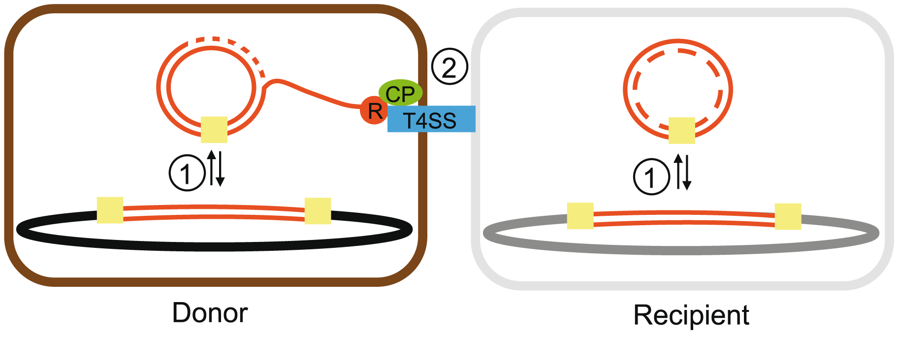 Scheme of some essential interactions in the process of ICEs movement.
