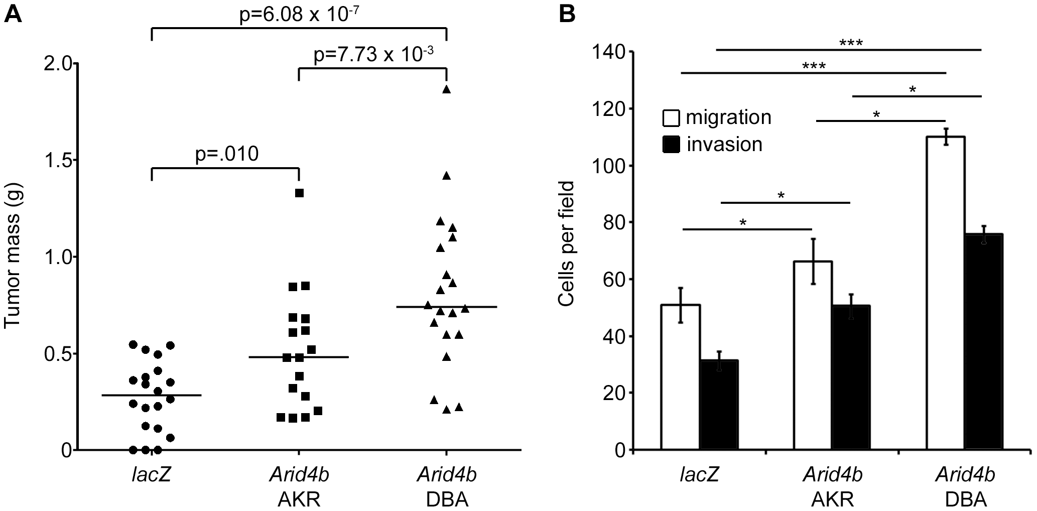 Ectopic expression of <i>Arid4b</i> increases orthotopic tumor growth, tumor cell migration, and invasion.