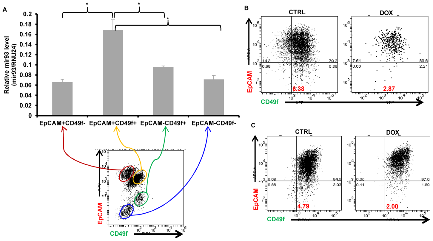 mir93 promotes MET in normal breast epithelial cells.
