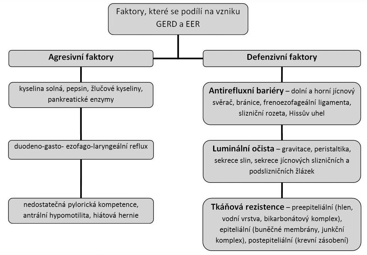 Schéma faktorů podílejících se na vzniku GERD a EER.
