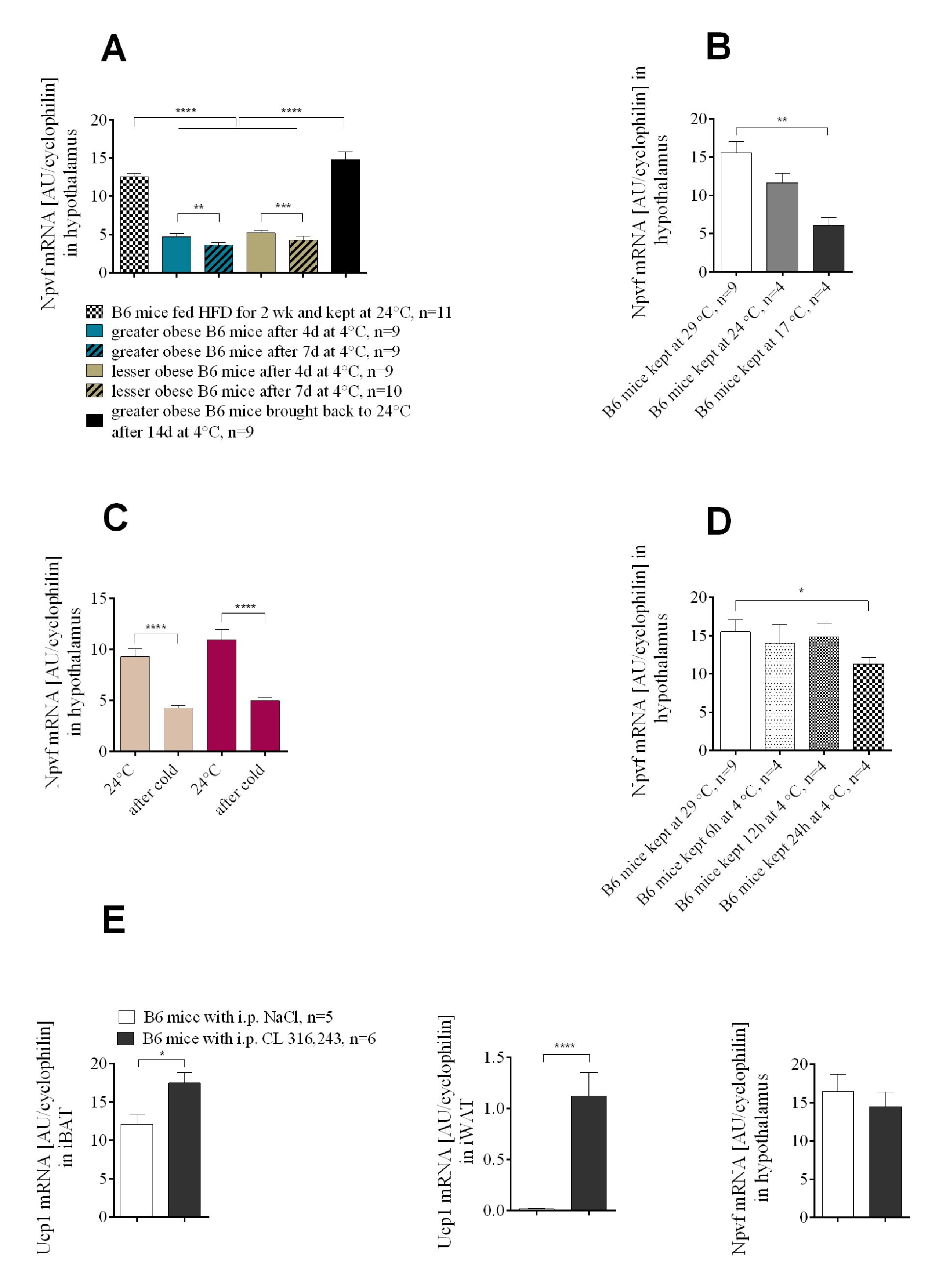 The expression of <i>Npvf</i> in the hypothalamus responds to reduced ambient temperature and time of exposure to the cold, but is not associated with the level of non-shivering thermogenesis in iBAT.