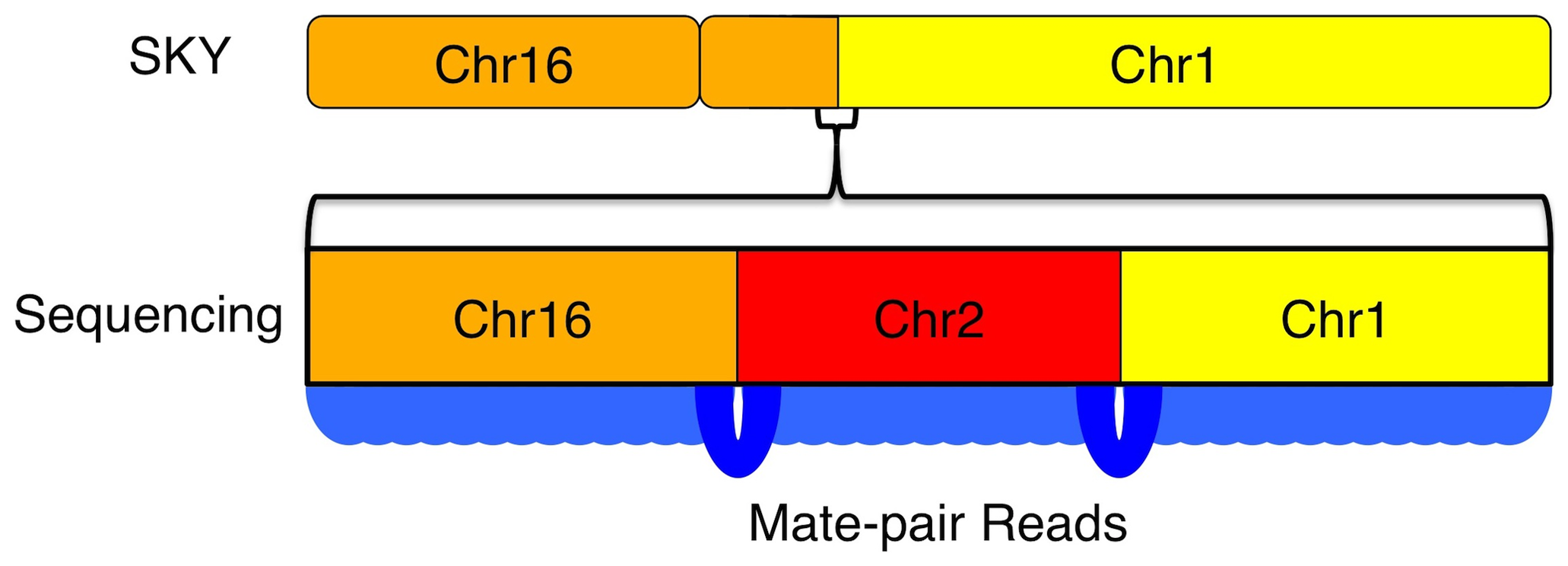 Increased resolution of structural variations by sequencing.