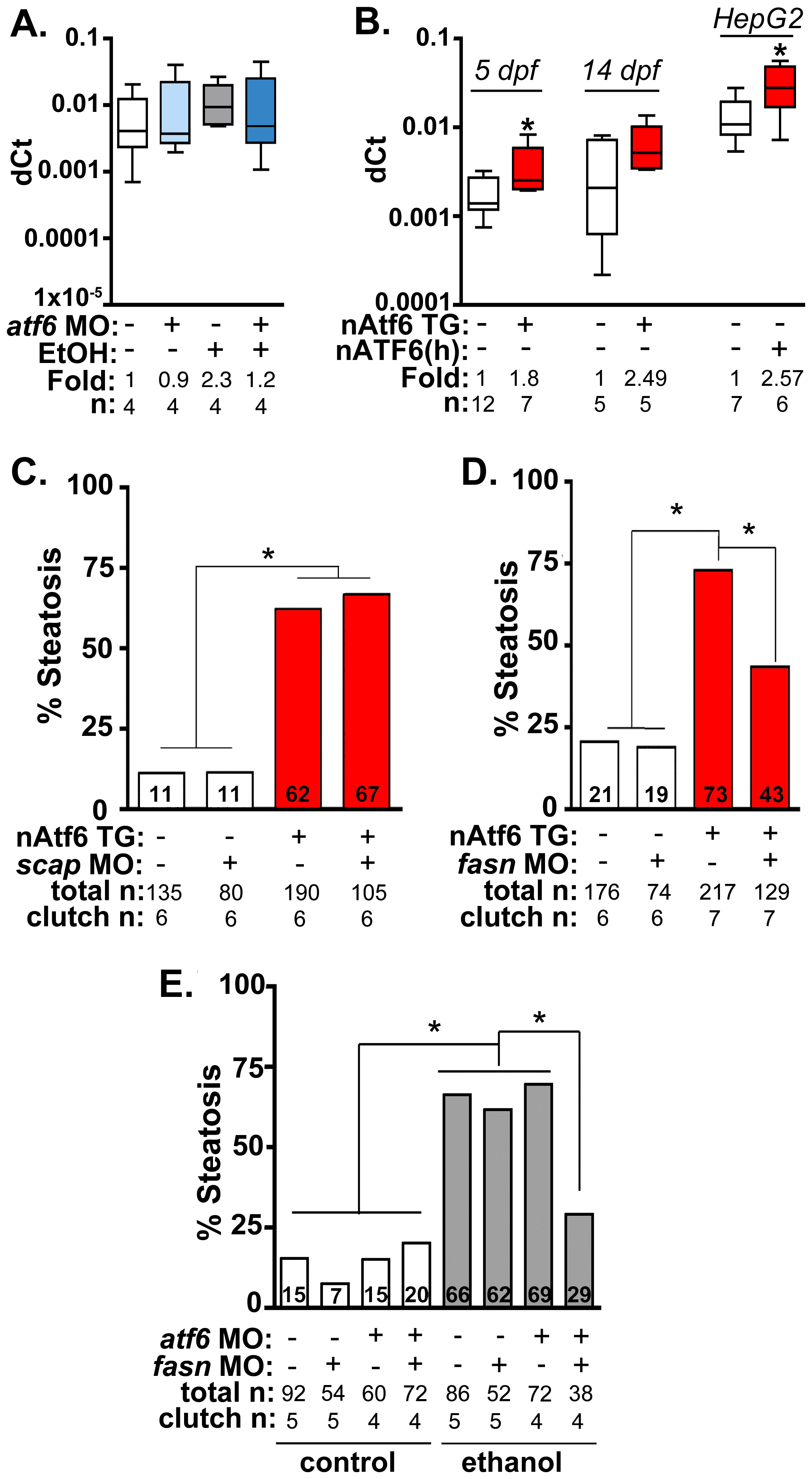 Fasn functions downstream of Atf6 to cause steatosis independent of Srebp activation.