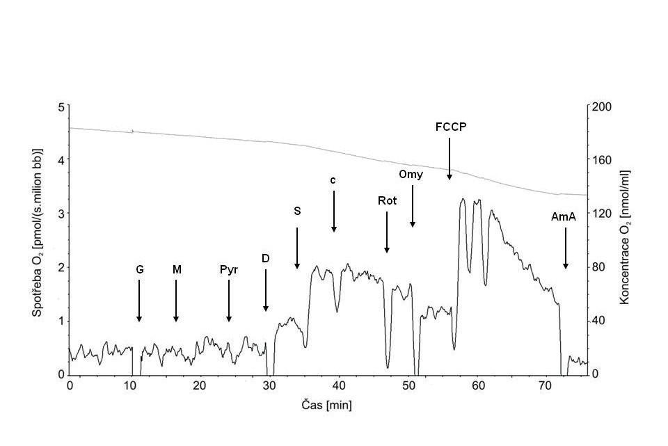 Typická křivka spotřeby kyslíku permeabilizovanými spermiemi Plná čára znázorňuje spotřebu kyslíku, tečkovaná koncentraci kyslíku v komůrce.  Šipky ukazují aplikaci jednotlivých chemikálií: G – glutamát; M – malát; Pyr – pyruvát; D – ADP; S – sukcinát; c – cytochrom c; Rot – rotenon; Omy – oligomycin; FCCP – karbonylkyanid-p-trifluorometoxyfenylhydrazon; Ama – antimycin A.