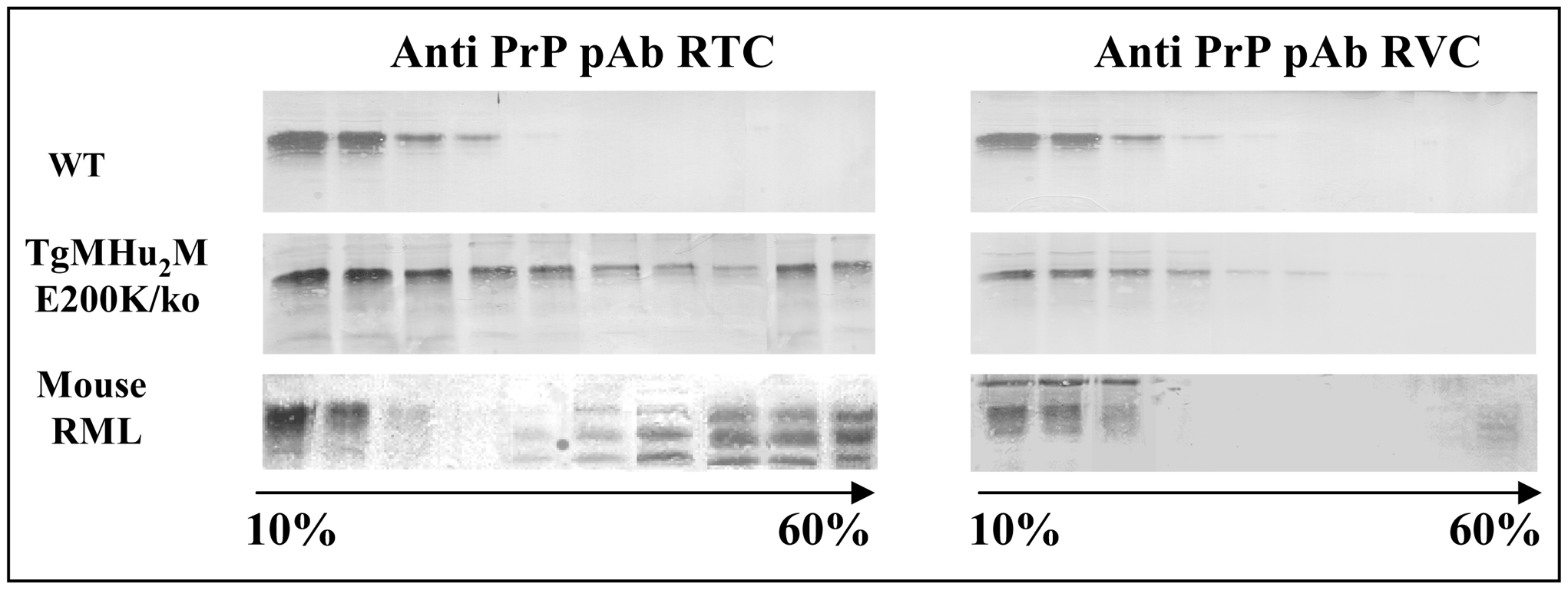 Oxidation of TgMHu2ME199K PrP in Tg mice.