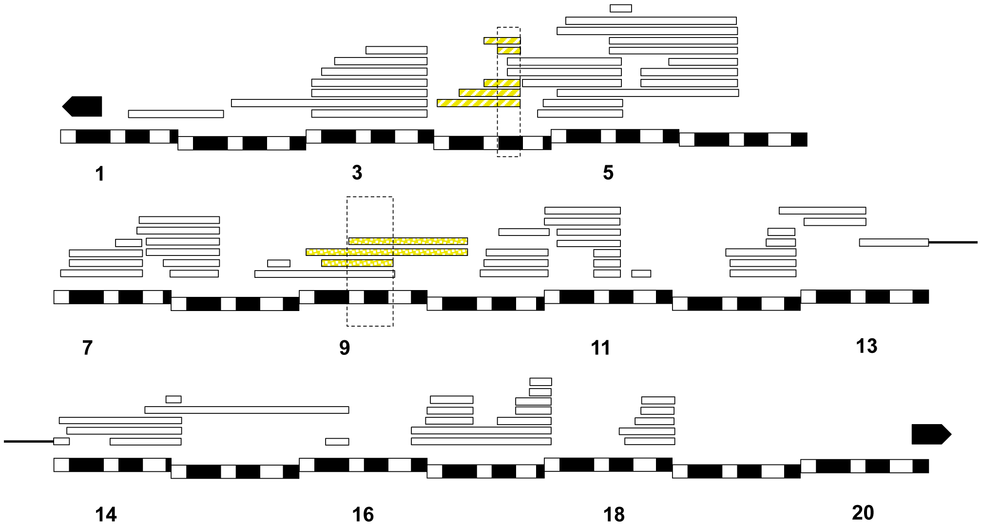 Relative frequency of hybrid lethal alleles in the <i>D. melanogaster X</i>-chromosome in hybrid males with <i>D. simulans</i>.