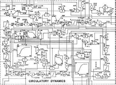 Fig. 7: Causal calculation of circulatory dynamics