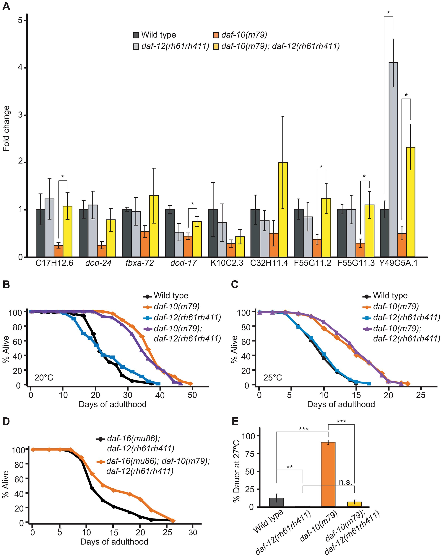 <i>daf-10</i> mutations influence the expression of DAF-12/NHR-regulated genes.