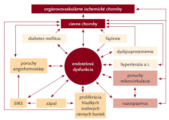 Dysfunkcia endotelu a jej význam v patogenéze aterosklerózy, artériovej trombózy, iných cievnych chorôb a orgánovovaskulárnych artériových ischemických chorôb.