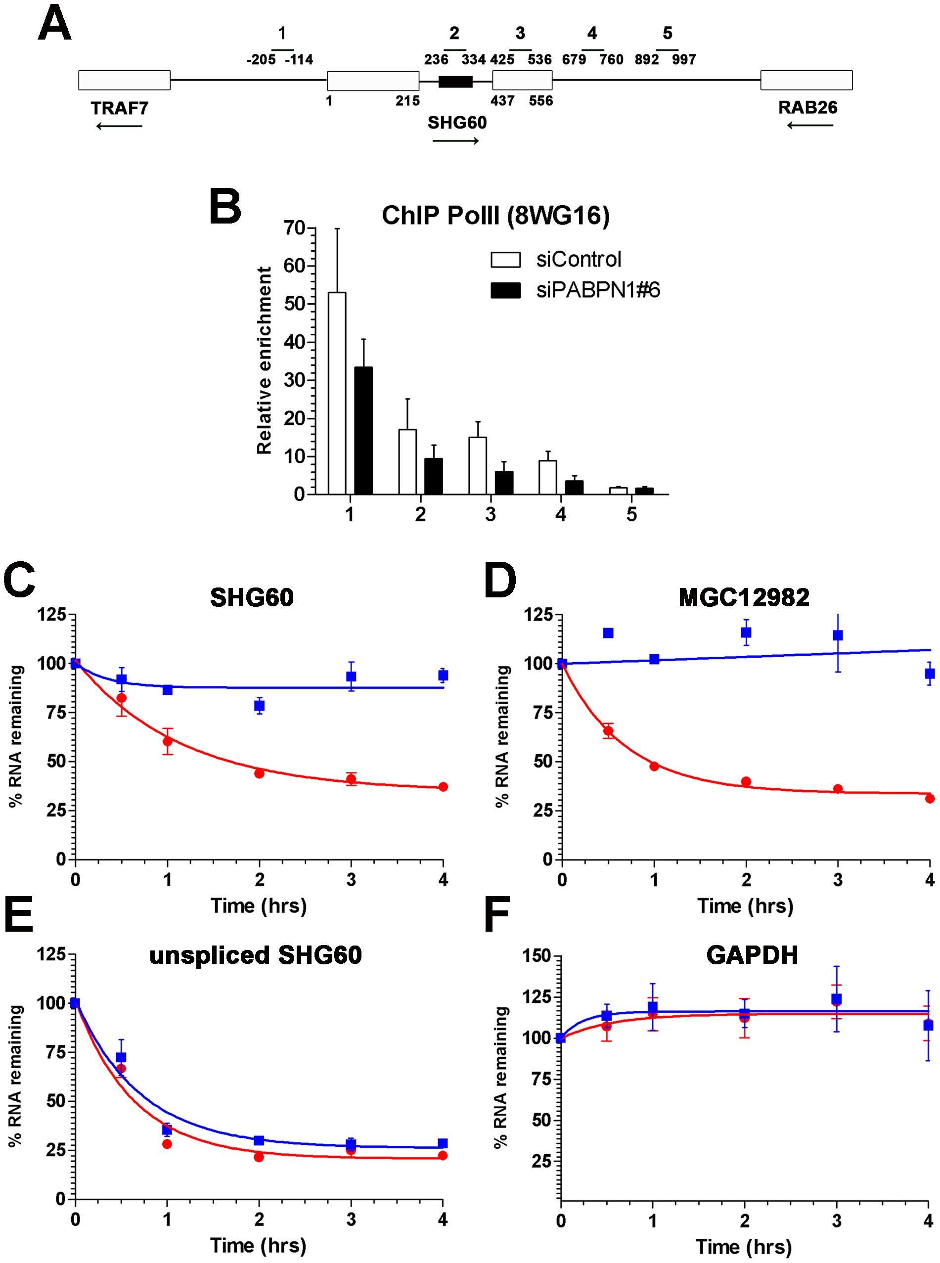 PABPN1 promotes lncRNA turnover.