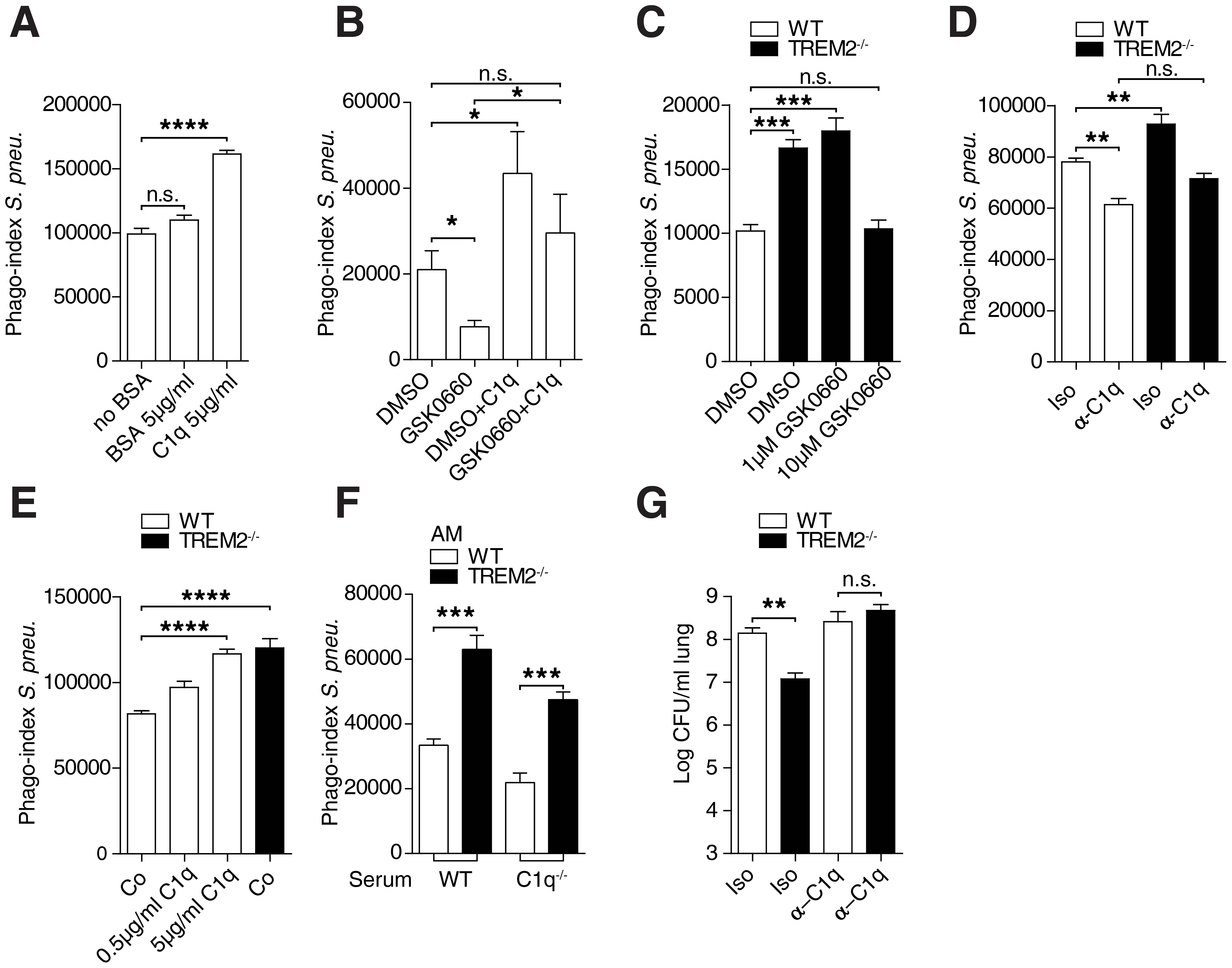 Enhanced phagocytosis by <i>Trem-2</i><sup>−/−</sup> AM depends on C1q.