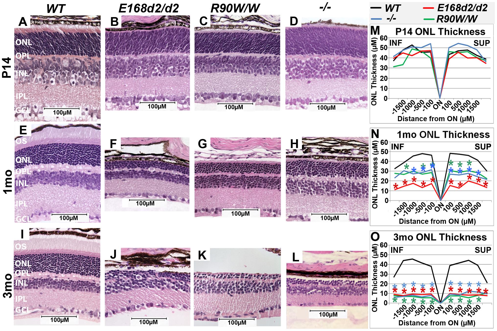 Homozygous <i>E168d2/d2</i> and <i>R90W/W</i> mice develop 'LCA'-like retinopathy.