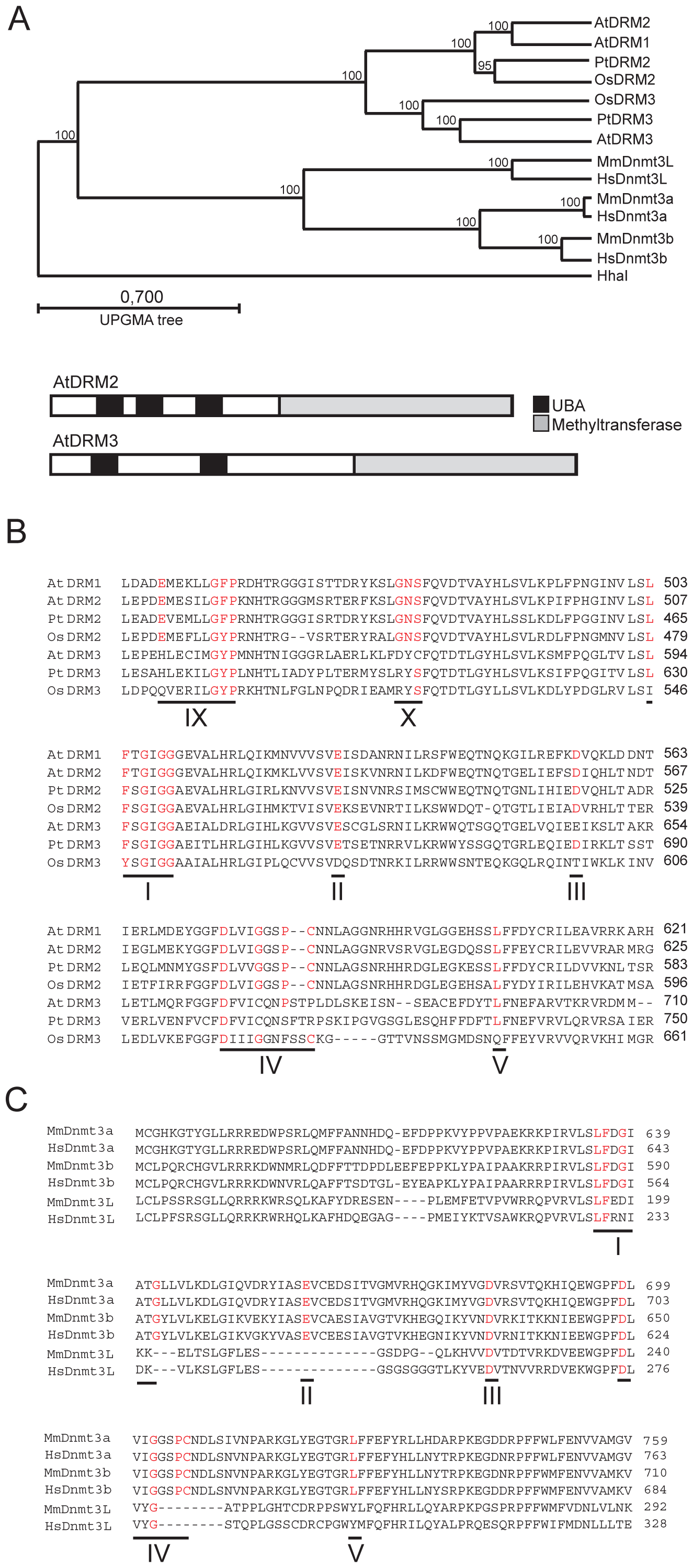 A conserved clade of catalytically mutated DRM cytosine methyltransferase paralogs in angiosperms.