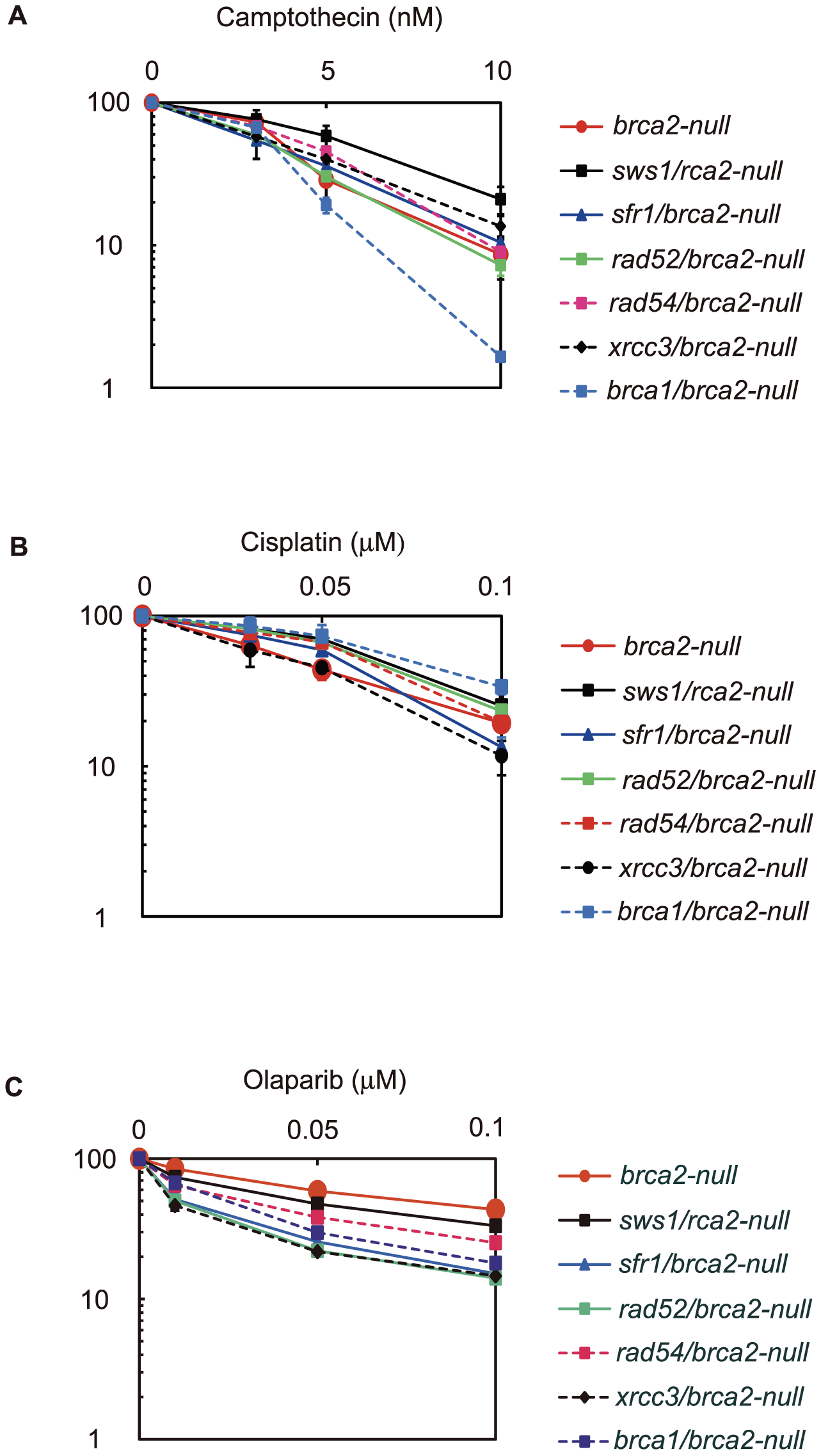 Effect of <i>brca2</i> deletion on <i>sws1-</i>, <i>sfr1-</i>, <i>rad52-</i>, <i>rad54-</i>, <i>xrcc3-</i>, and <i>brca1-</i>deficient cells.