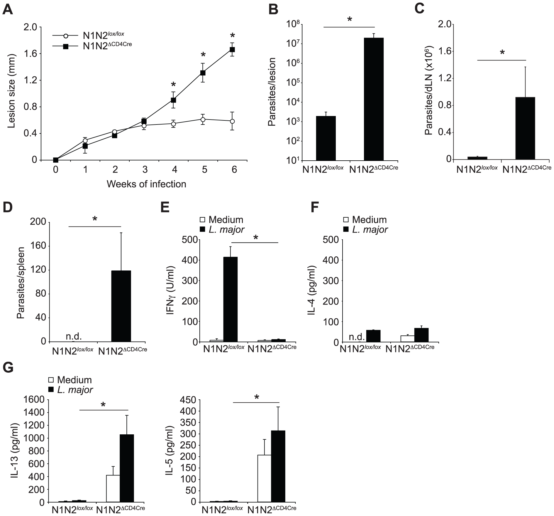 N1N2<sup>ΔCD4Cre</sup> mice on the C57BL/6 <i>L. major</i> resistant background are susceptible to infection.